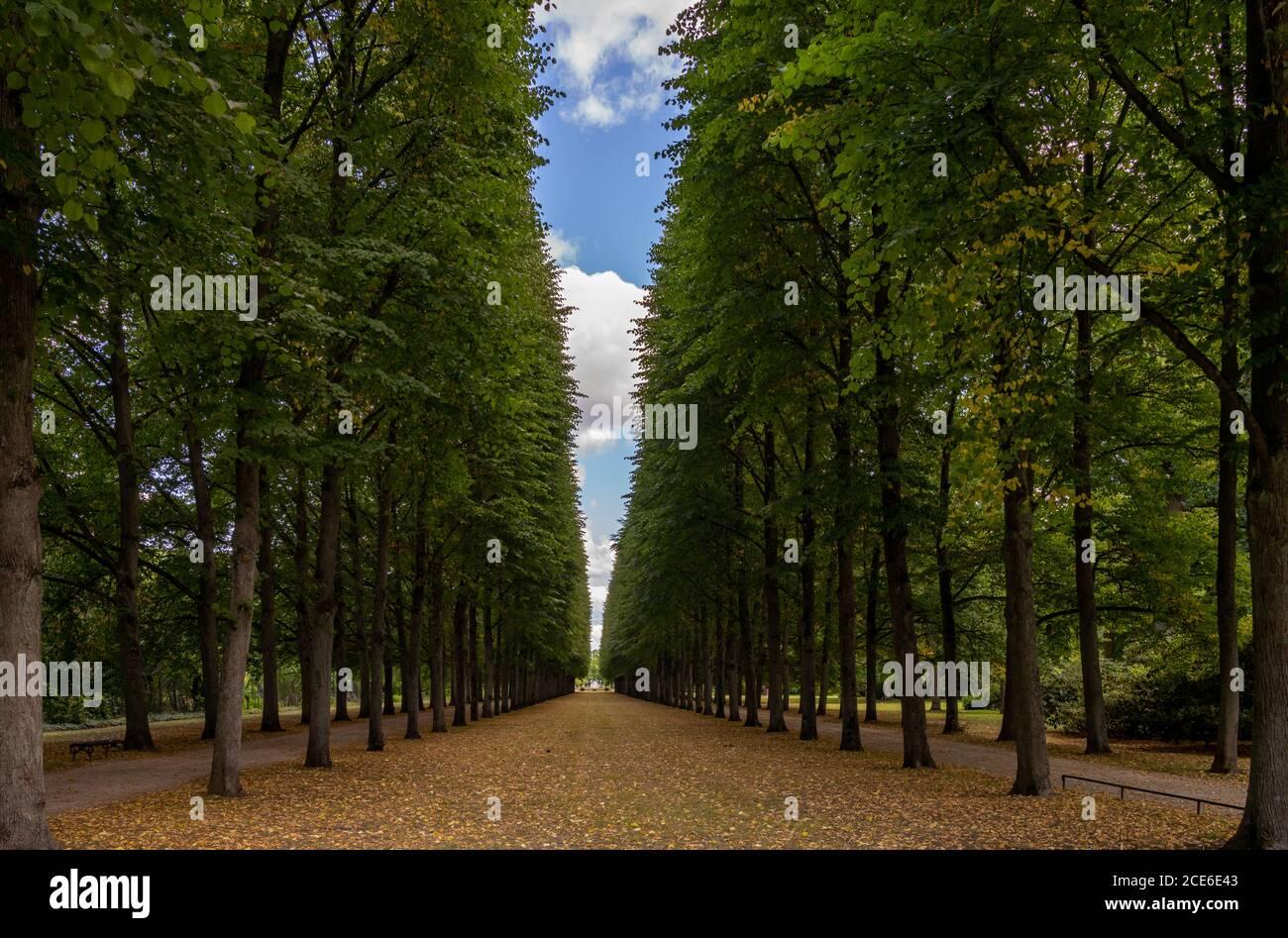 Un hermoso callejón sin fin de árboles altos conducen a la horizonte Foto de stock
