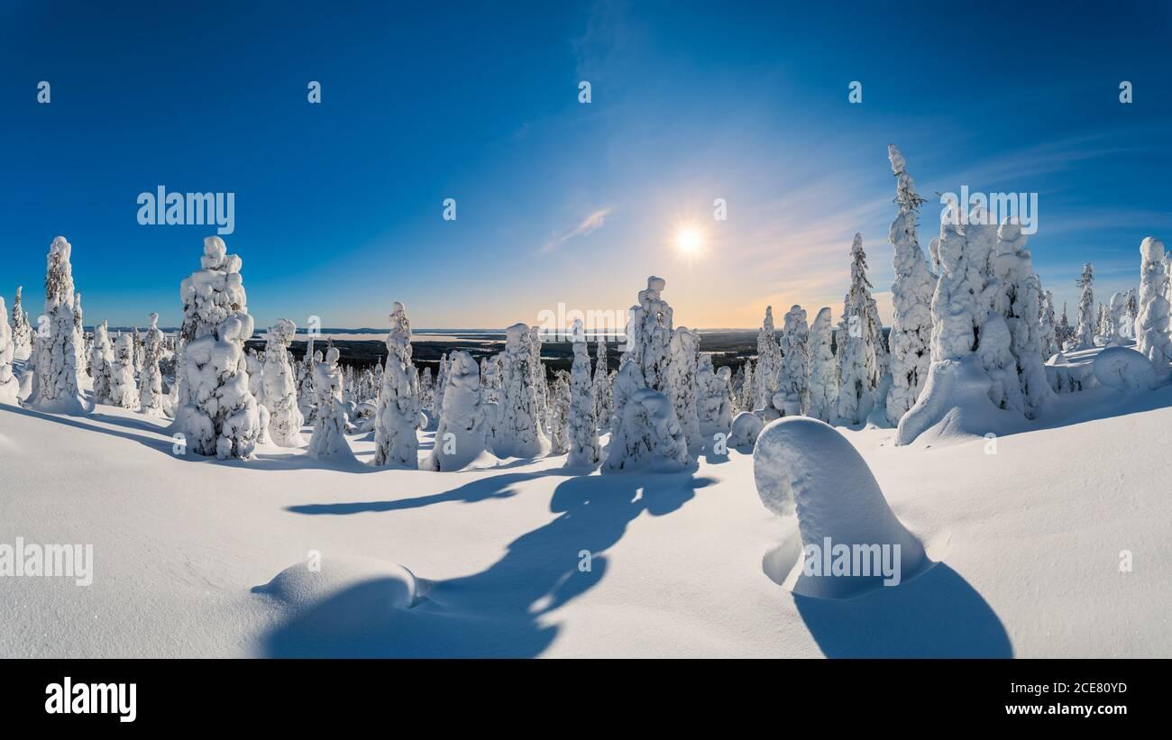 Pintoresco paisaje de bosque de invierno cubierto de suave nieve bajo el cielo azul brillante en el día soleado Foto de stock