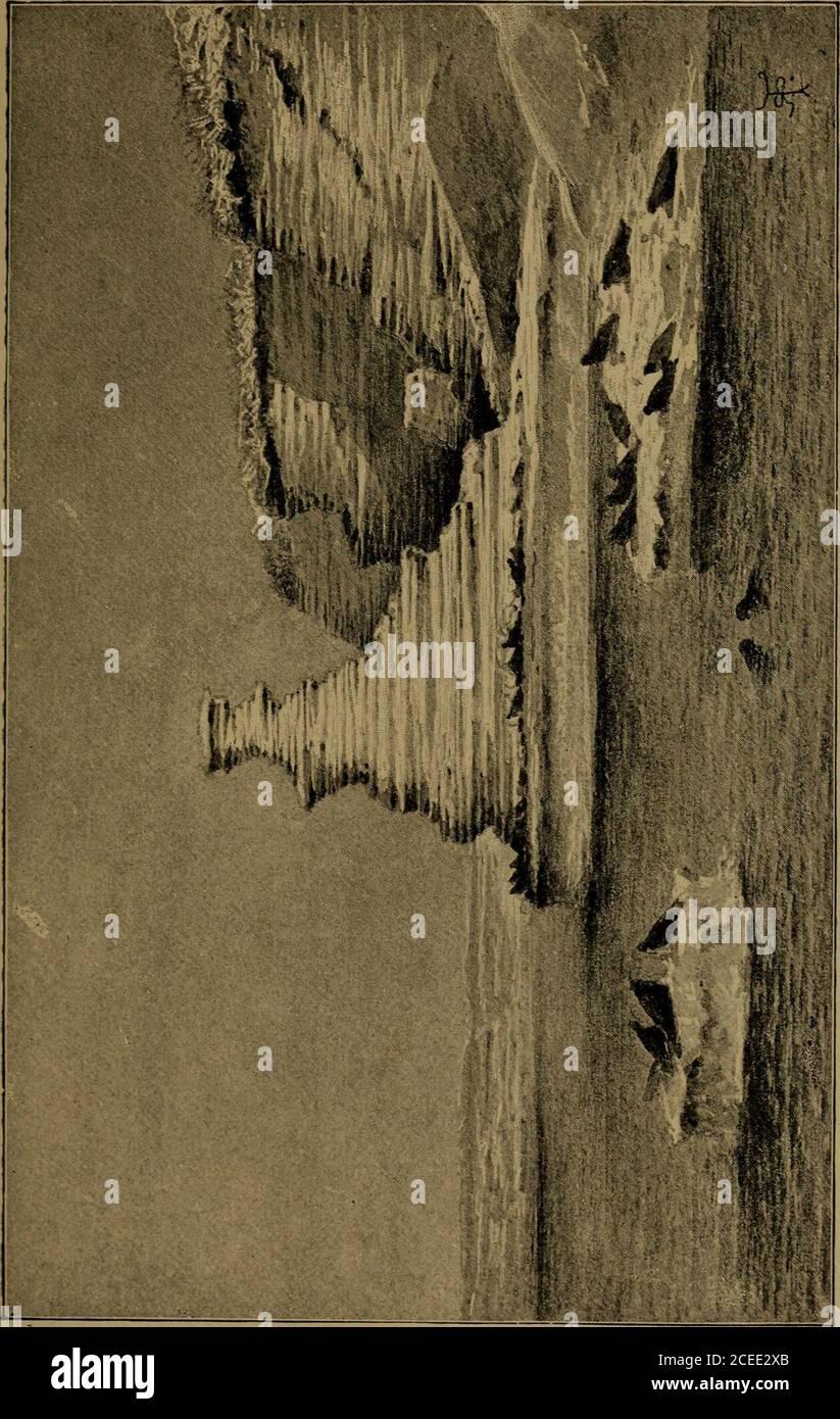 """. Diario de investigaciones sobre la historia natural y la geología de los países visitados durante el viaje alrededor del mundo de H.M.S. """"Beagle"""", bajo el mando del Capitán Fitz Roy, su vegetación atónimida; pero la relación de la Macrauchenia con el teguanaco, ahora habitante de las partes más estériles, explica esta dificultad. La relación, aunque distante, entre el Macraucheniay el Guanaco, entre el Toxodon y el Capybara, la relación más cercana entre los muchos Edentata extintos y los perezosos vivos, hormigueros y armadilloes, ahora tan eminentlycaracterístico del Sur Foto de stock"""