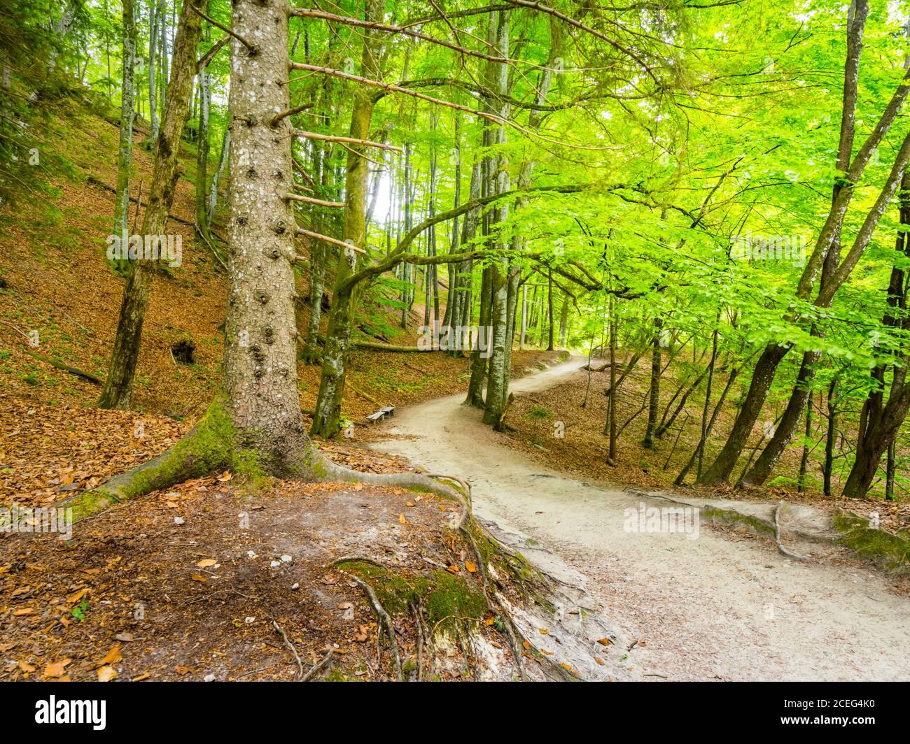 Camino de bosque camino camino camino camino camino camino camino Parque Nacional Plitvice lagos en Croacia Europa paisaje escénico Foto de stock