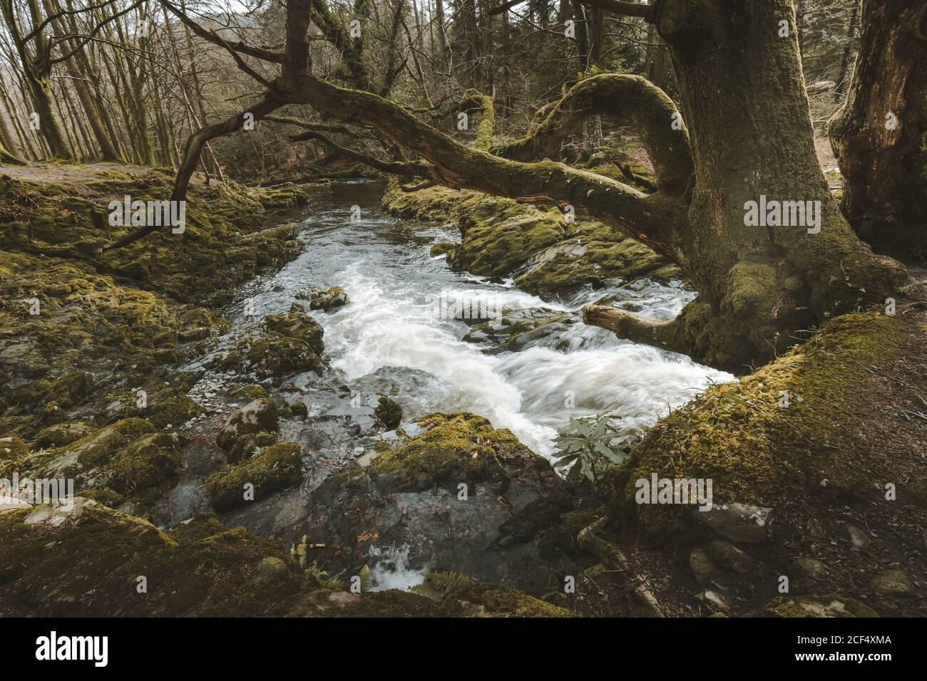 Paisaje primaveral de parque forestal con un pequeño río que fluye Entre los viejos árboles y piedras cubiertas de musgo en el norte Irlanda Foto de stock