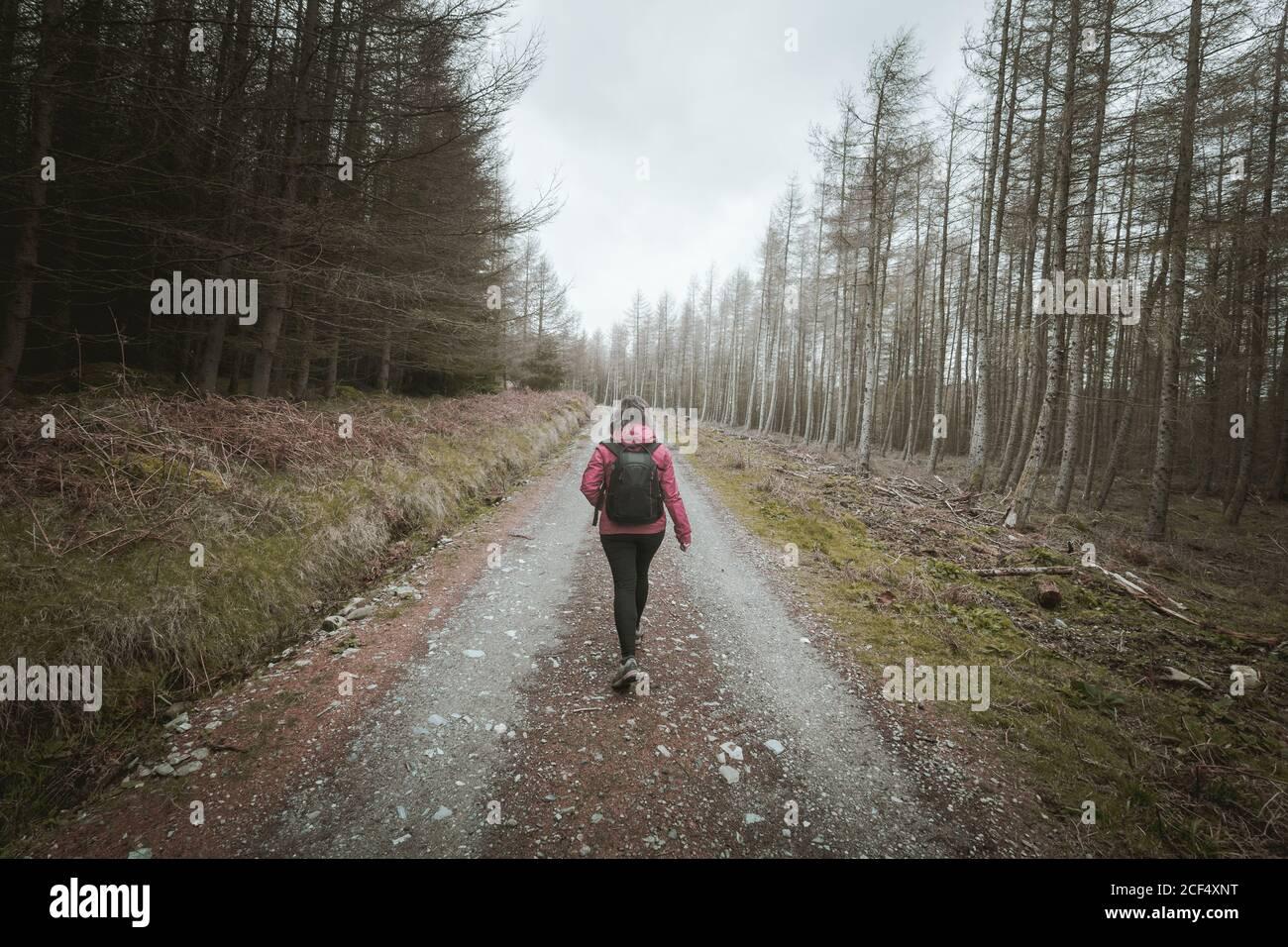 Vista posterior de la mujer anónima viajero en la cálida chaqueta de caminar En el bosque mientras se visita el Parque Forestal Tollymore en Irlanda del Norte en el día de la primavera Foto de stock