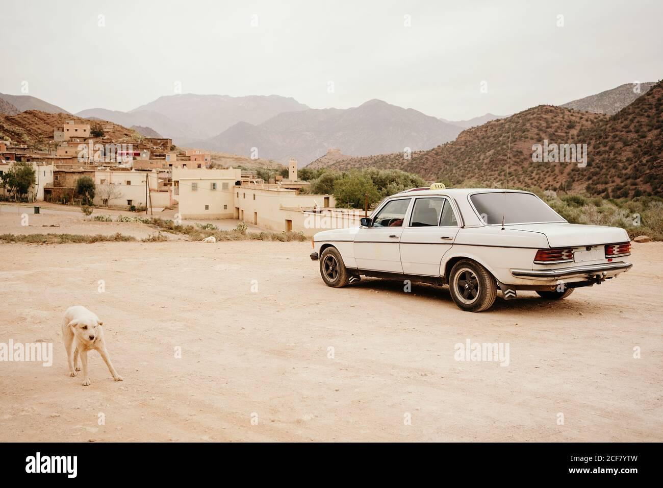 Un taxi blanco aparcado en una calle de tierra con un perro parado cerca En el barrio pobre de la ciudad de Marrakech con pequeñas casas de piedra situado en tierra montañosa Foto de stock