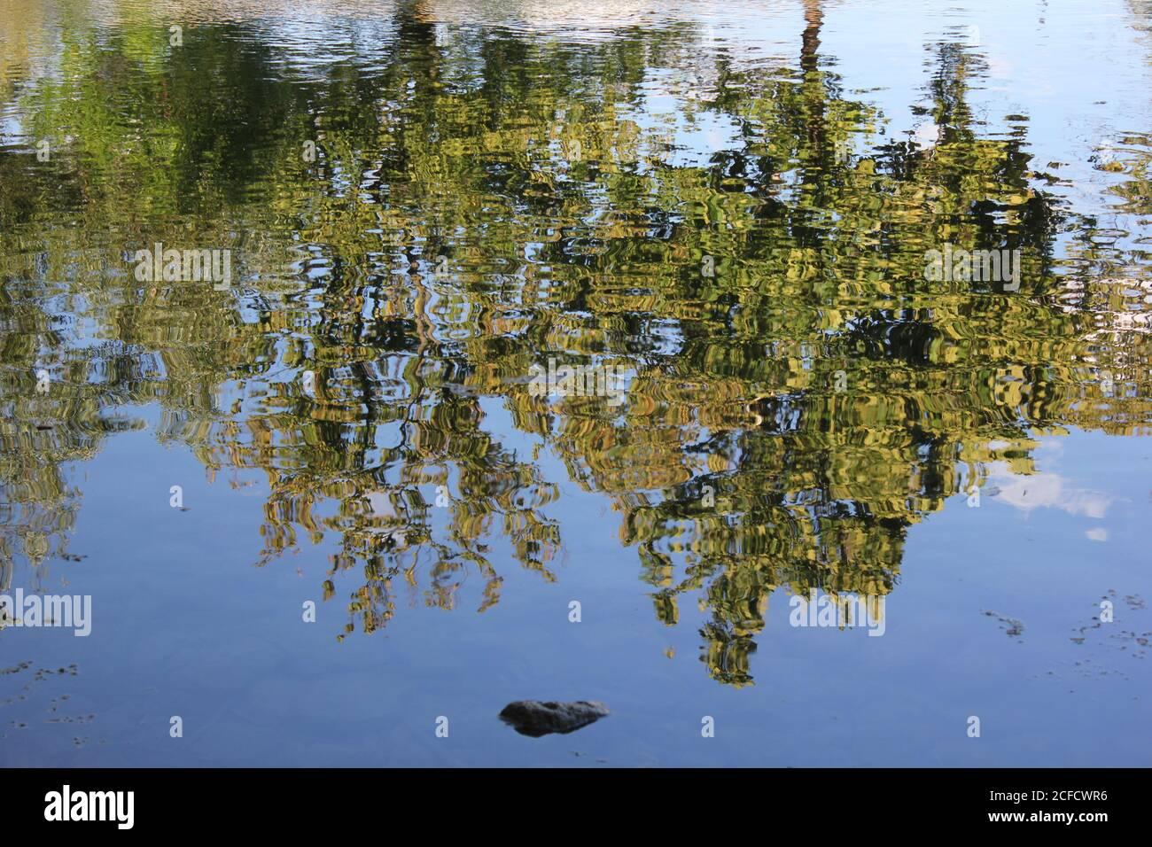 Reflejos de los árboles en el lago en la Reserva Forestal del Condado de Belleau Lake Cook en des Plaines, Illinois, EE.UU. Foto de stock