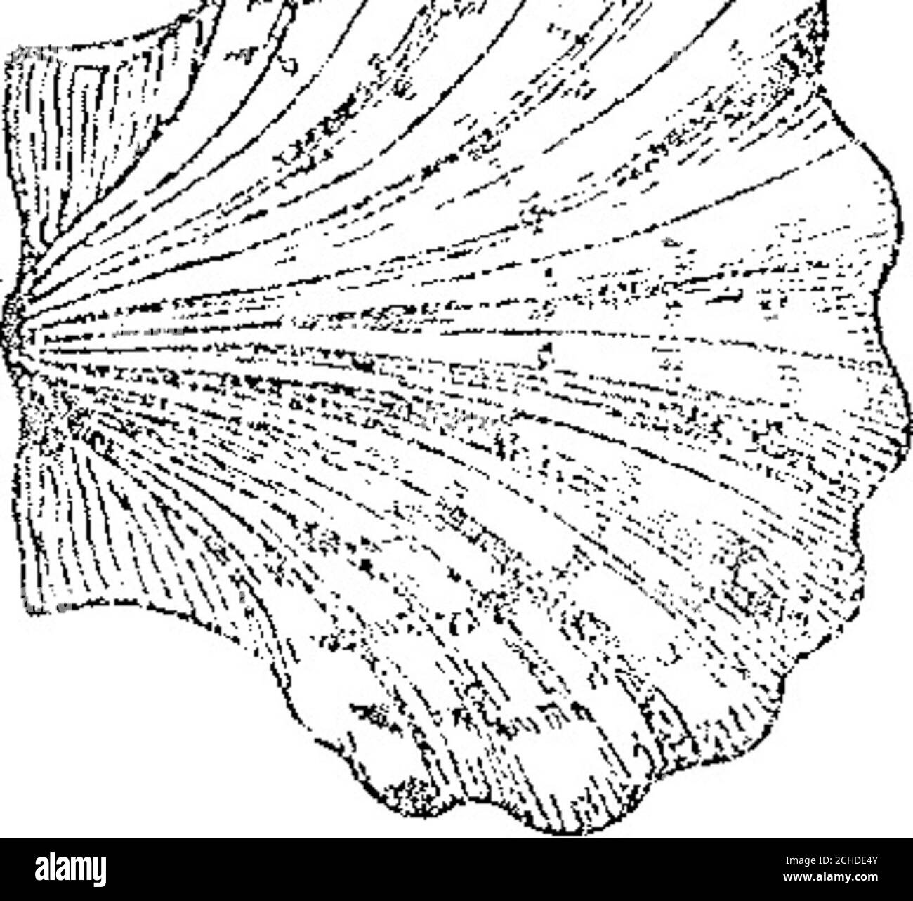 . Boletín Oficial de la República Argentina. 1908 1ra sección . 10 L fe tí Ñ OFiCiÁC AílÍJB SBÜ 23 5<)í Junio 25 de 1908—Luis Bazzi,—Artículos delas clases 61 á 70. v-3-julio. Fflswa rcsiBiíoiaíl» as1 a:5.ií7 ferie Ní Ül &íl£ /a # 7 • LACnMCHA. Conedida en Noviembre 8 de 1904, pro-piedad d ¡os señores Echfgaray Hnos y Cíaquienes renuncian a esta Marca en cuanto se refiere á nafta, bencina y demás ciencias y espí-ritus de petróleo pí¡a motores de la clase 9únicamente. v-julio 3. ACIA si0 SSS.SOJS sí¥l ¿3.5 24 V Junio 25 de 190R.--Chissa Hermano?.—Ar-tículos de las clases 2, 29 y 33 Foto de stock