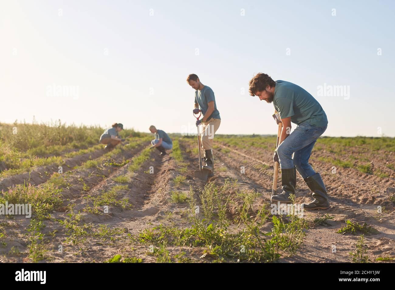 Vista angular de los trabajadores excavando suelo con palas y plantando cultivos en plantaciones de hortalizas al aire libre iluminado por la luz del sol, copiar espacio Foto de stock
