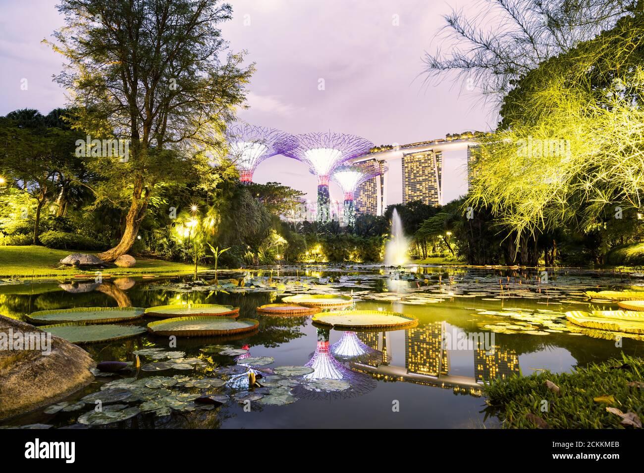 Impresionante vista de la arboleda iluminada en la distancia y el estanque de nenúfares en el primer plano. Foto de stock