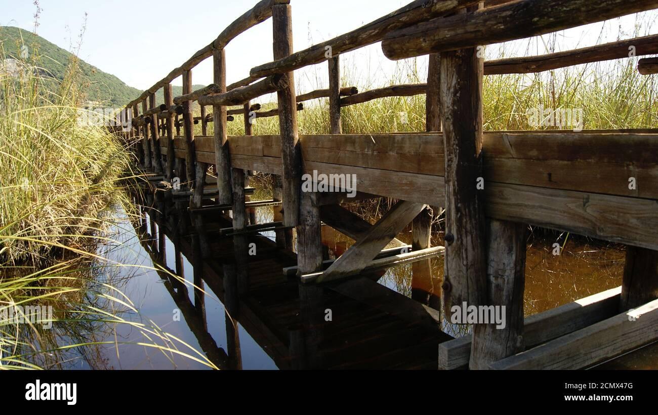 Il ponte sul lago di Massaciuccoli, provincia di Lucca, un osservatorio naturale. Il ponte di legno tra la palude lacustre. Una strada di legno. Foto de stock