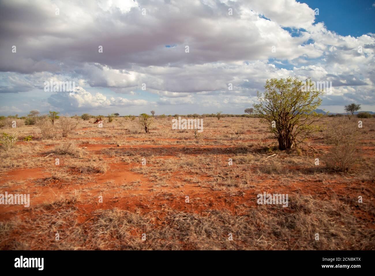 Paisaje con suelo rojo, árboles, cielo azul con nubes blancas, Kenya Foto de stock