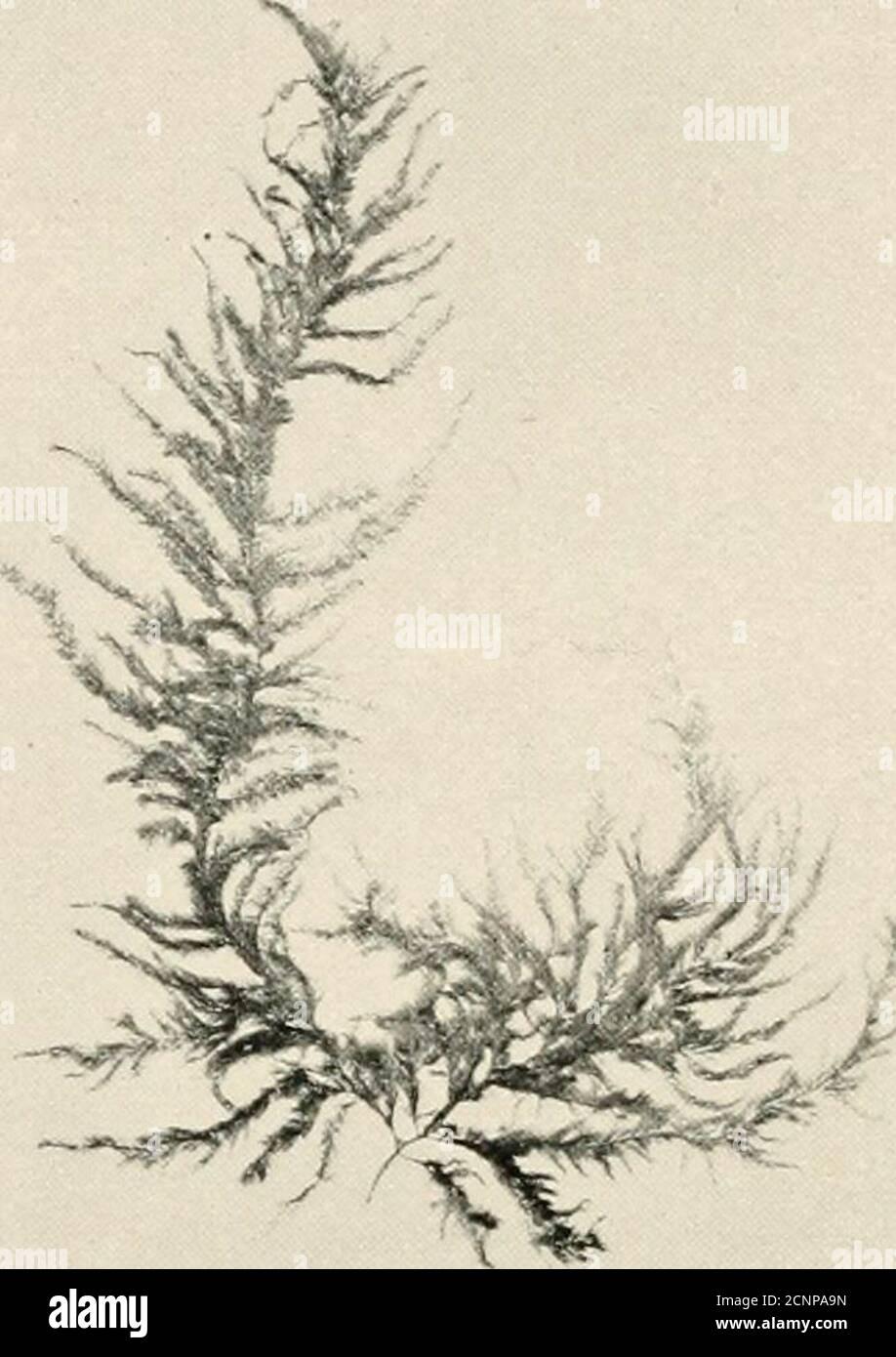 . La playa de mar en la marea baja : una guía para el estudio de las algas marinas y la vida animal más baja encontrada entre los tidemarks . Foto de stock