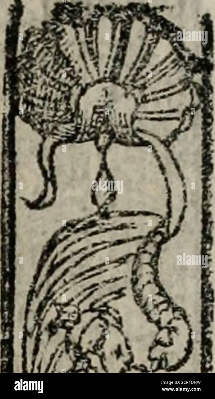 . Emblemas morales de Don Sebastián de Couarrubias Orozco ... . E-MüLEM A. -yp.£ la ha wbre fu bit l dejperta dora,(¡ tte aguz ajos ingerí iosj leuantaLa natural aBúciaJncjmrtdoradel arte,que a los mu y fabios i (pata :¡la picaca es parlera,( ¡) X 3 en ■<#! Foto de stock