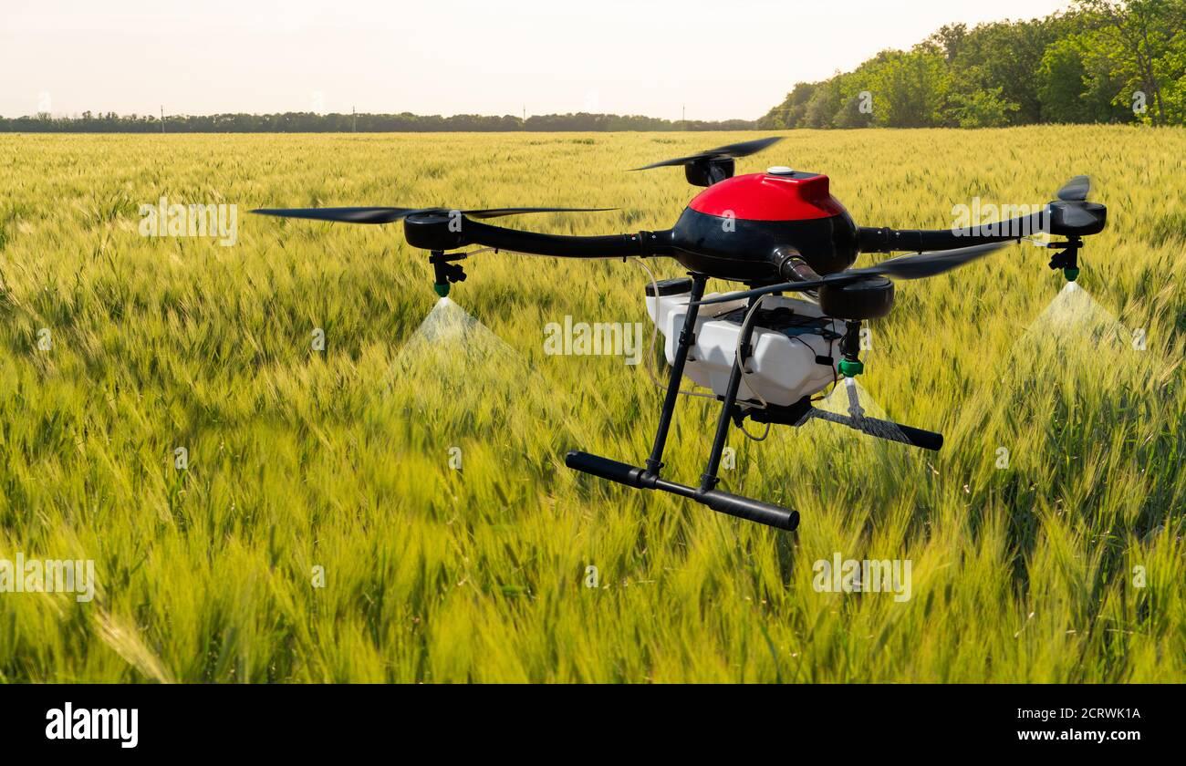 El drone agrícola vuela sobre el campo de maíz. Agricultura inteligente y agricultura de precisión Foto de stock