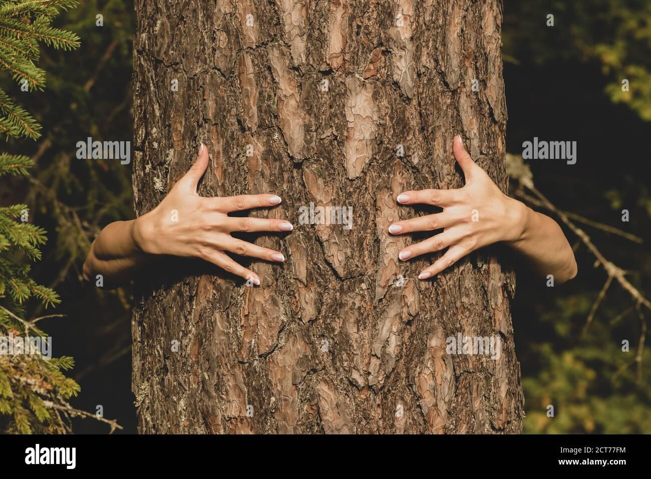 Concepto humano y natural. Mujer manos abrazando el pino en el fondo del follaje oscuro con el espacio de copia Foto de stock