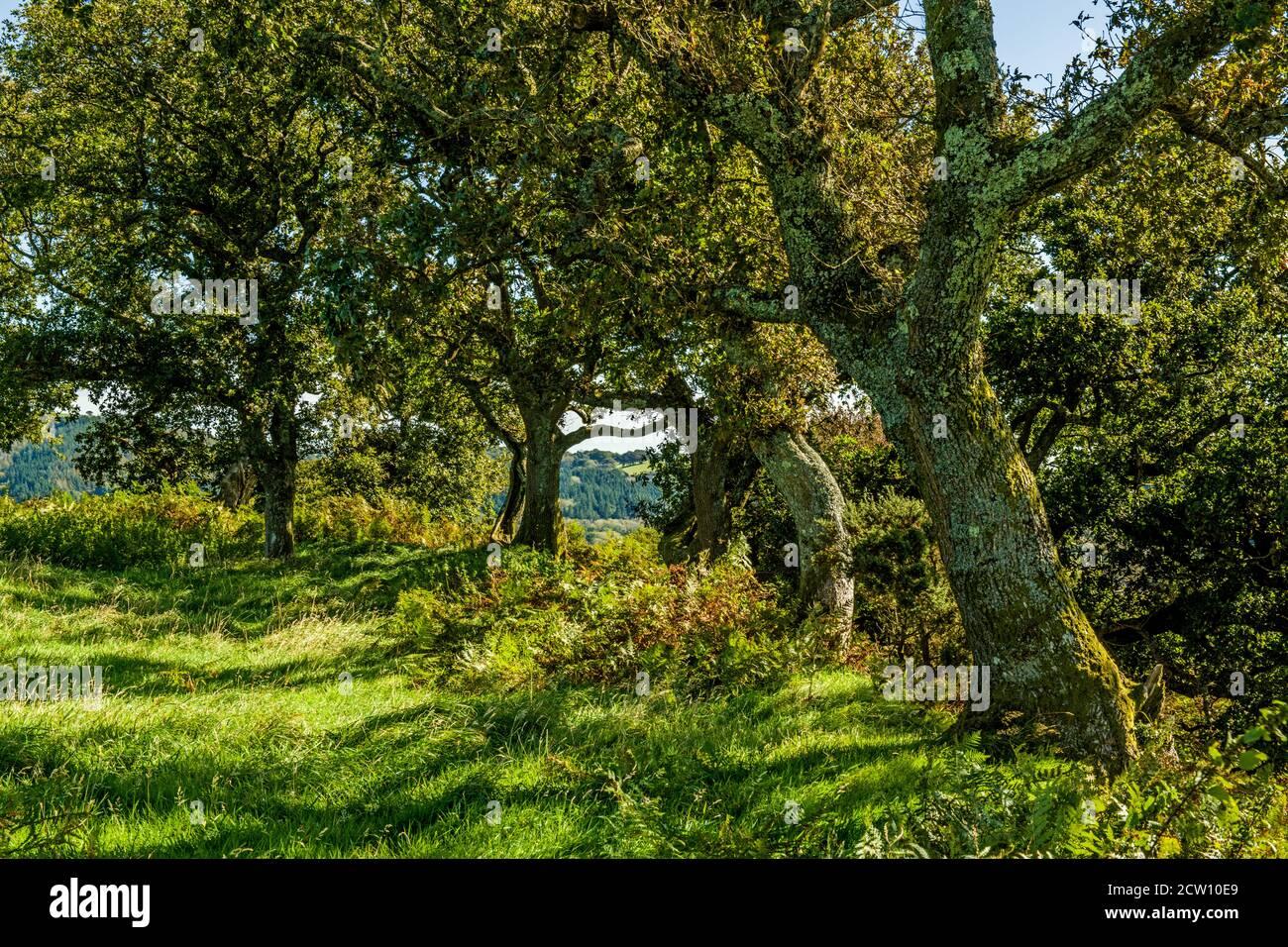 Escenas rurales cerca de la colina de Caerau, por encima de Rhiwsaeson, cerca de Llantrisant, al sur de Gales en un soleado día de septiembre, al sur de Gales Foto de stock