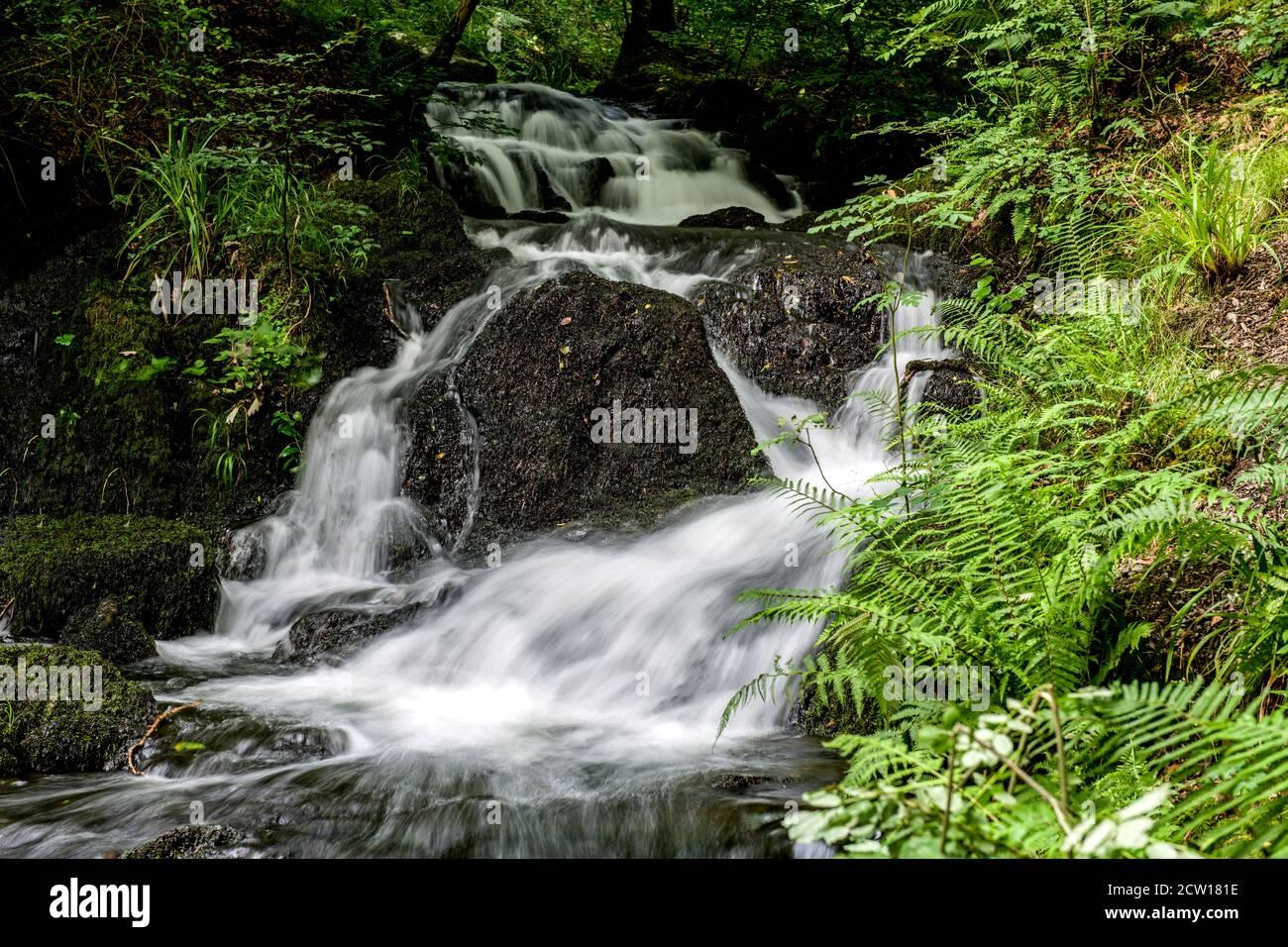 Una cascada en el Wynlass Beck como hace su camino a Windermere vía Miller Ground, en el Parque Nacional del Distrito de los Lagos. Foto de stock
