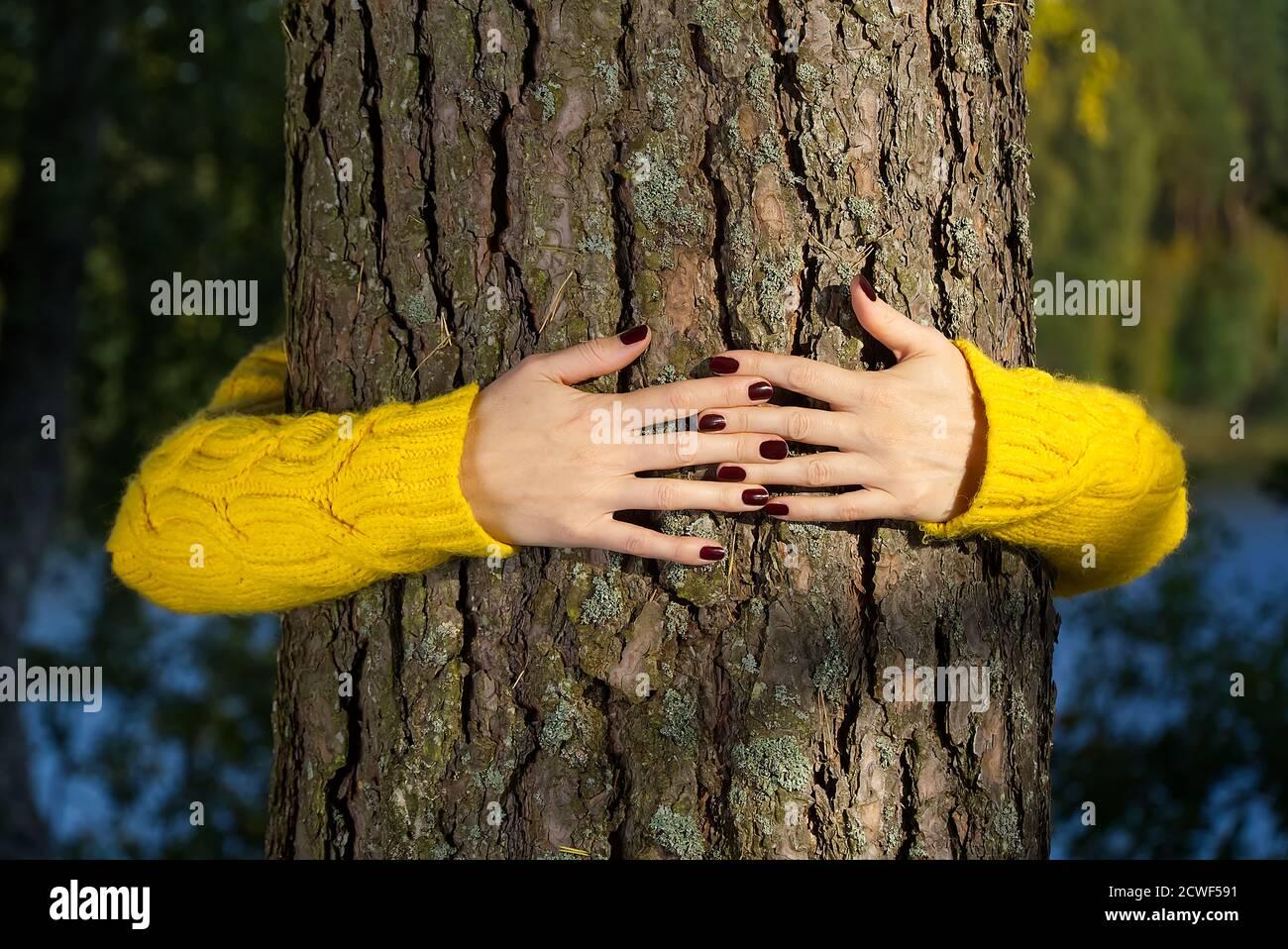 Manos de la mujer abrazando el tronco del pino en el bosque de otoño concepto de ecología y medio ambiente, estilo de vida ecológico - cambiar el mundo, la protección para la vida y el planeta Foto de stock