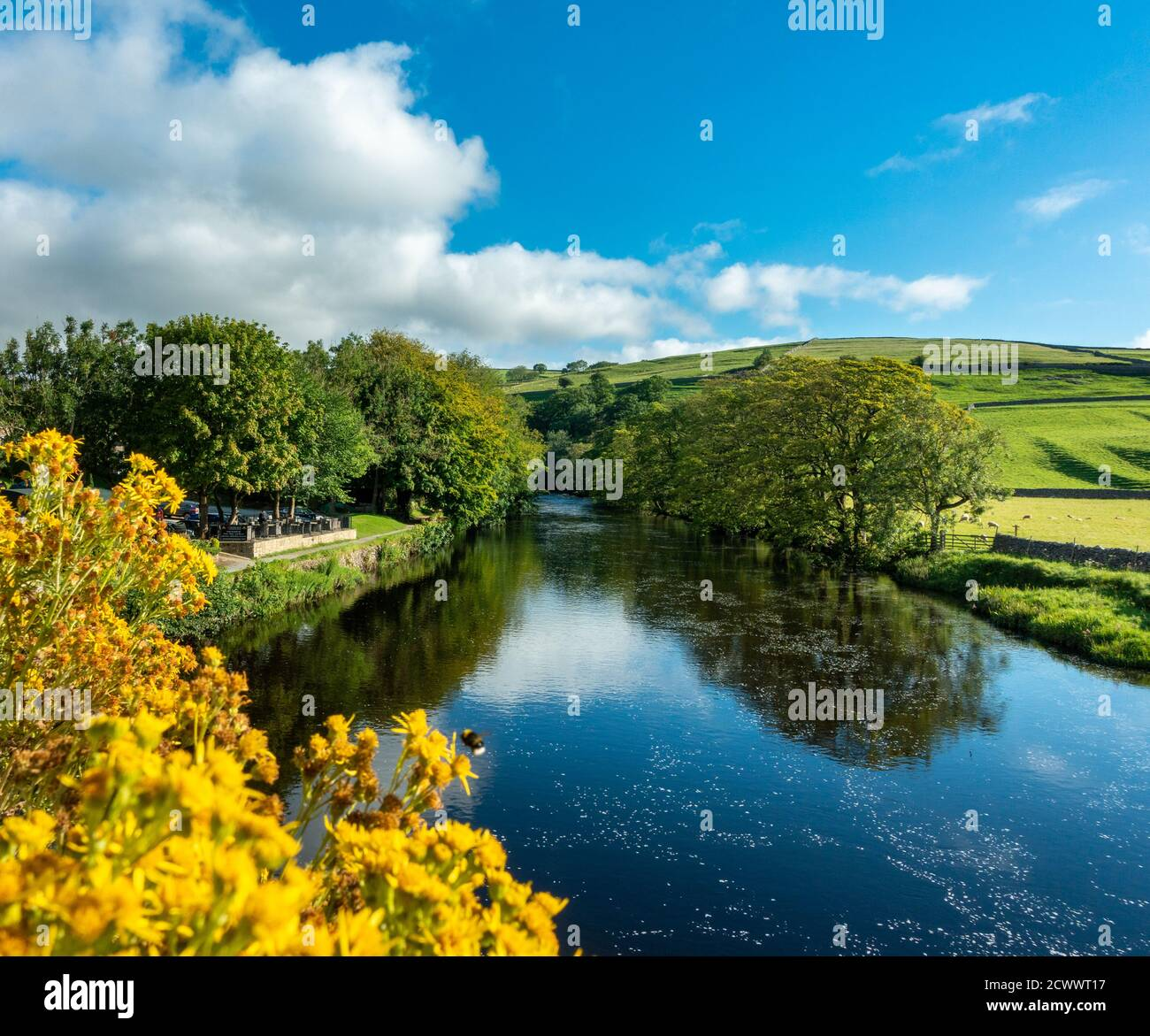 Vea el río Wharfe desde el puente Burnsall con campos verdes, flores de ragwort amarillo y cielo azul, Parque Nacional de Yorkshire Dales, Reino Unido Foto de stock