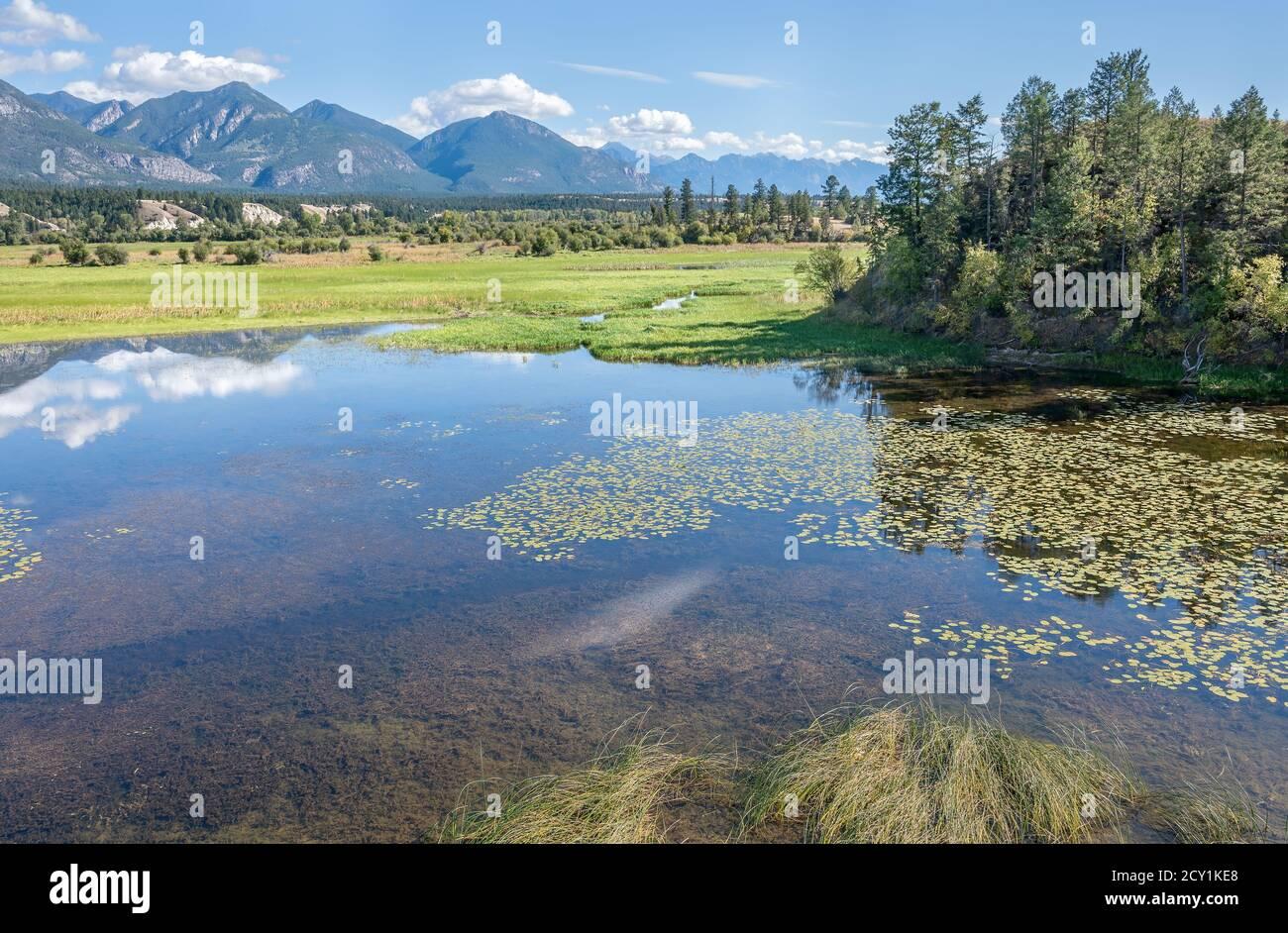 Humedales en el Área Nacional de vida Silvestre de Columbia (también conocida como Wilmer Bird Sanctuary) en Wilmer, Columbia Británica, Canadá Foto de stock