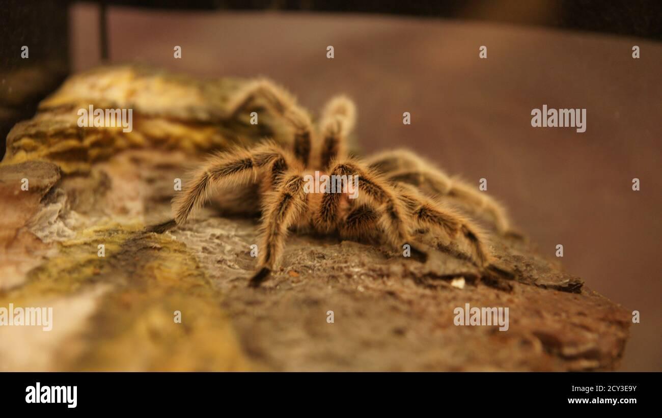 Araña Foto de stock
