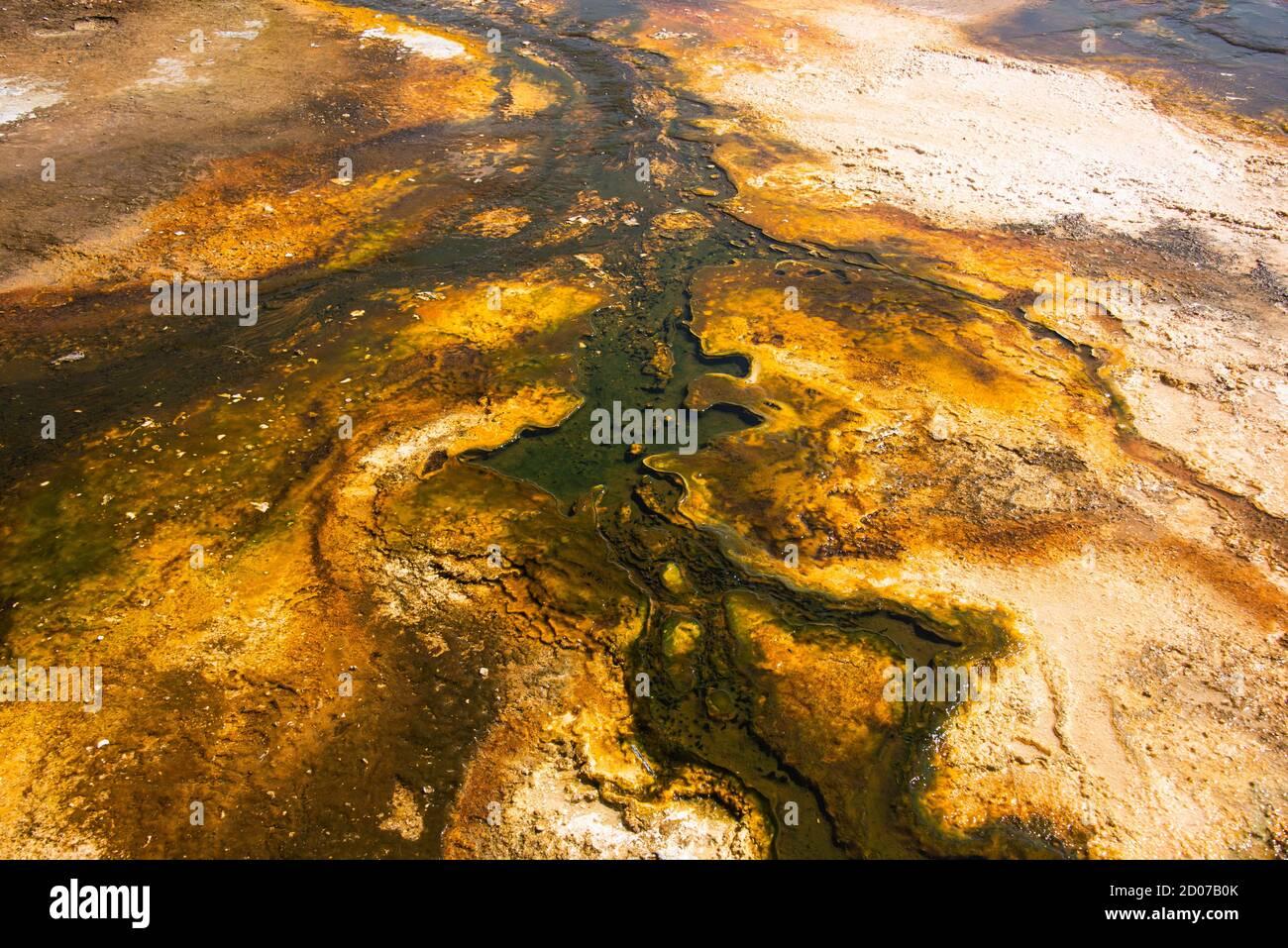 Colchoneta bacteriana, Cuenca del Geyser Superior, Parque Nacional Yellowstone, Wyoming, EE.UU Foto de stock