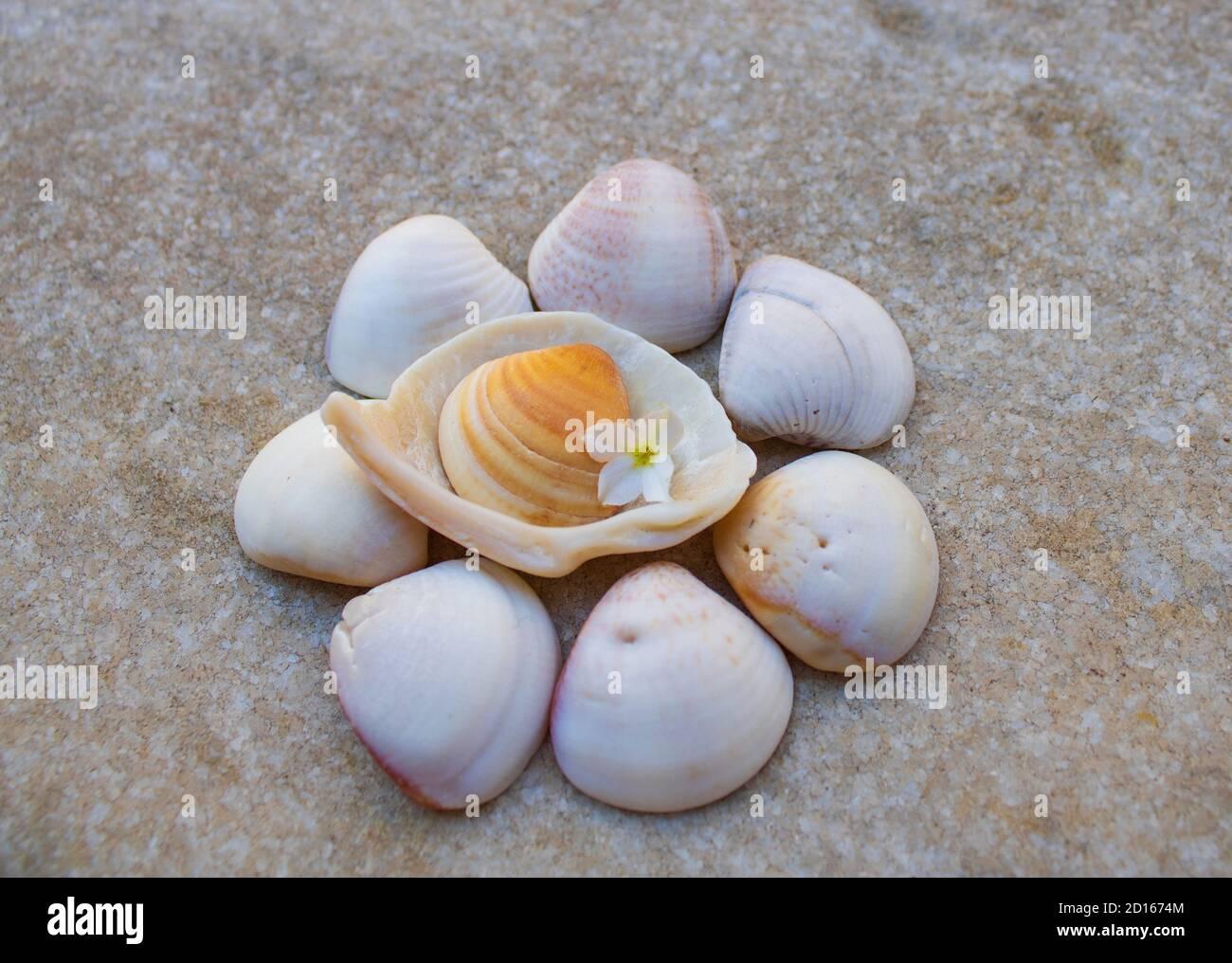 colina de varias coloristas conchas de mar con flores blancas fondo gris mezclado Foto de stock