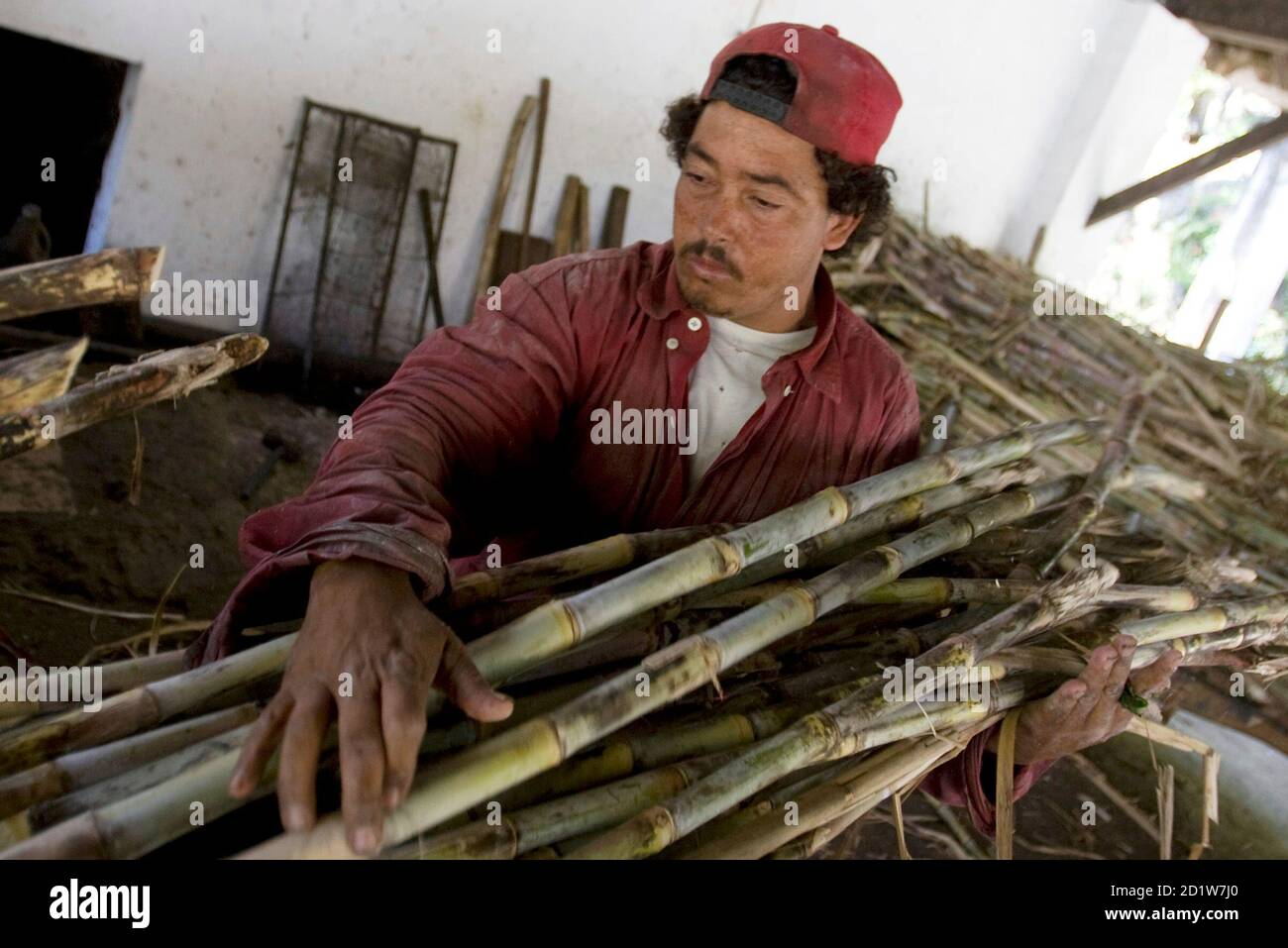 A worker processes sugar cane for cachaca at a micro-distillery, or alambique, farm about 150 kms ( 93 miles) northwest of Rio de Janeiro, August 29, 2008.  Brazil produces more than 1.8 billion liters of cachaca, the country's most popular drink, each year. REUTERS/Bruno Domingos (BRAZIL) Foto de stock