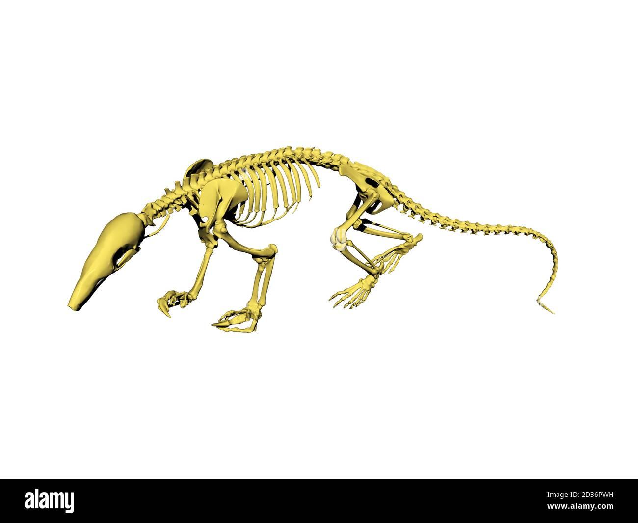 Esqueleto De Rata Fotos E Imágenes De Stock Alamy