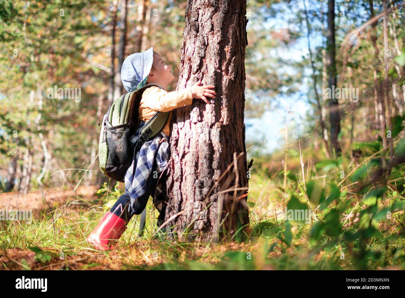 Un niño pequeño en un suéter amarillo abraza un pino en el bosque otoñal. Infancia con concepto amante de la naturaleza Foto de stock
