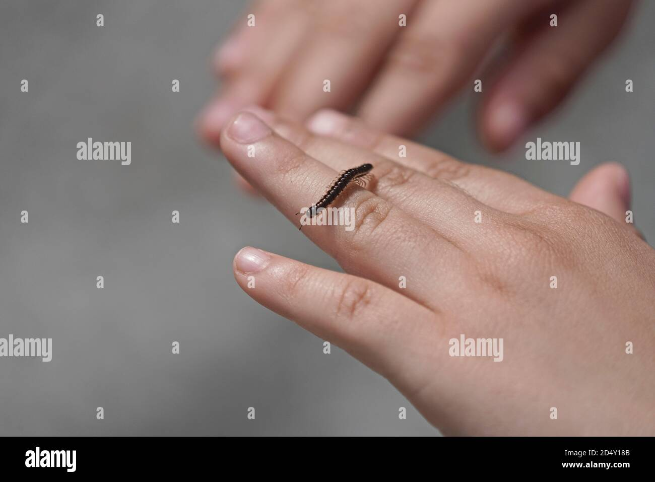 ´s mano de niño sosteniendo un pequeño milipede Foto de stock