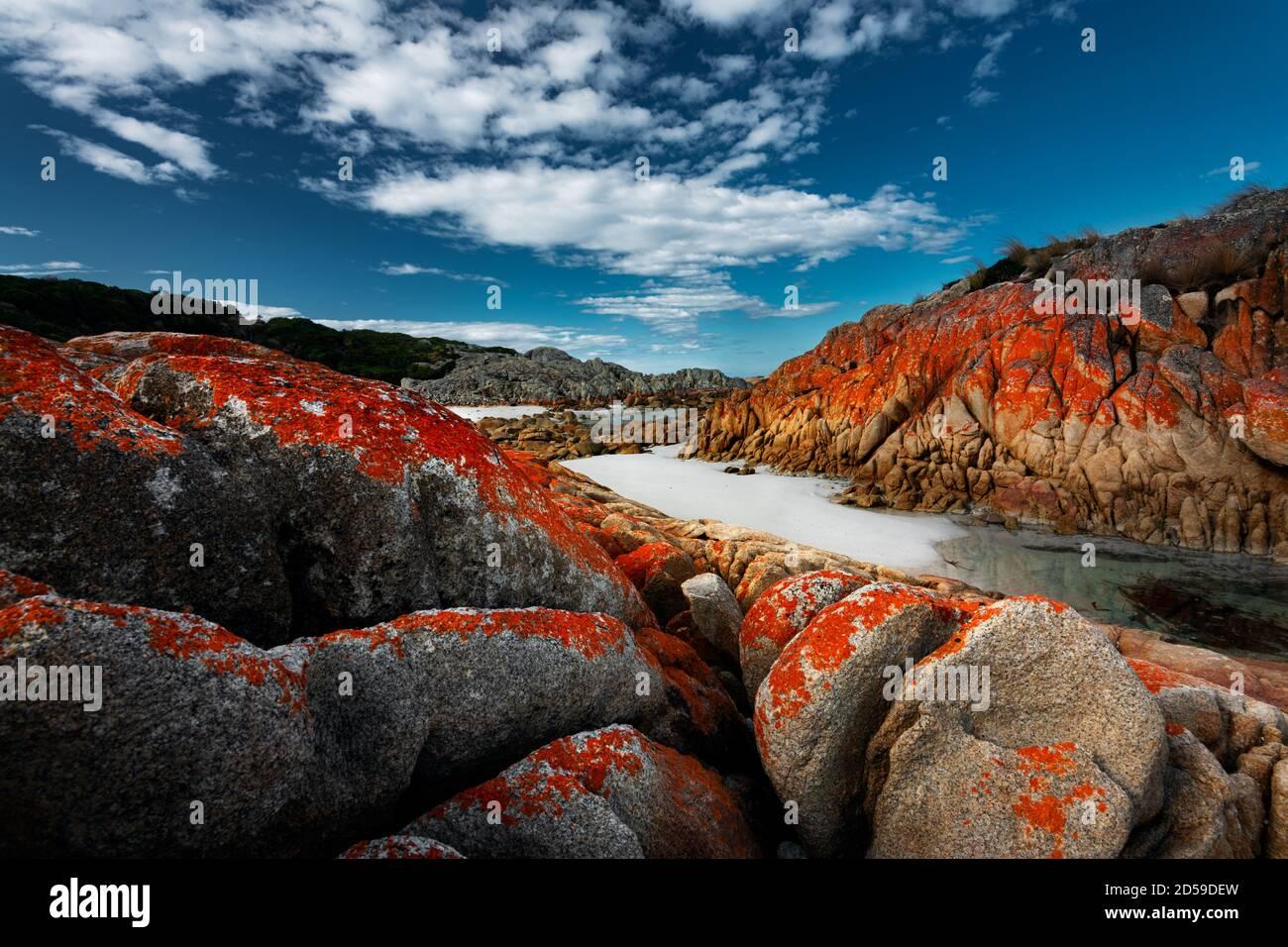 Liquen de colores en las rocas de Eddystone Point. Foto de stock
