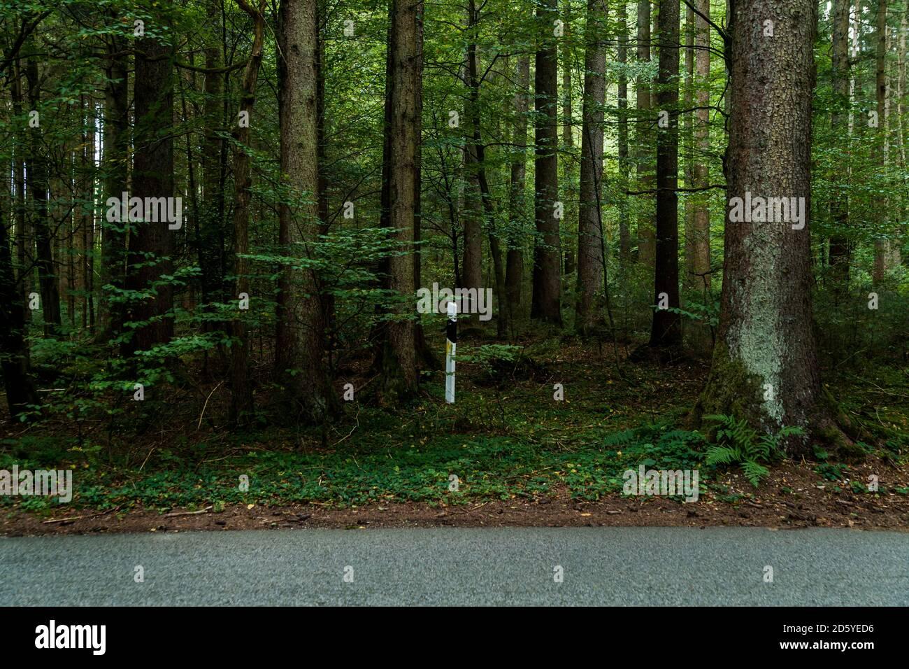 Alemania, Baviera, inútil puesto de marcador en el bosque por país por carretera Foto de stock