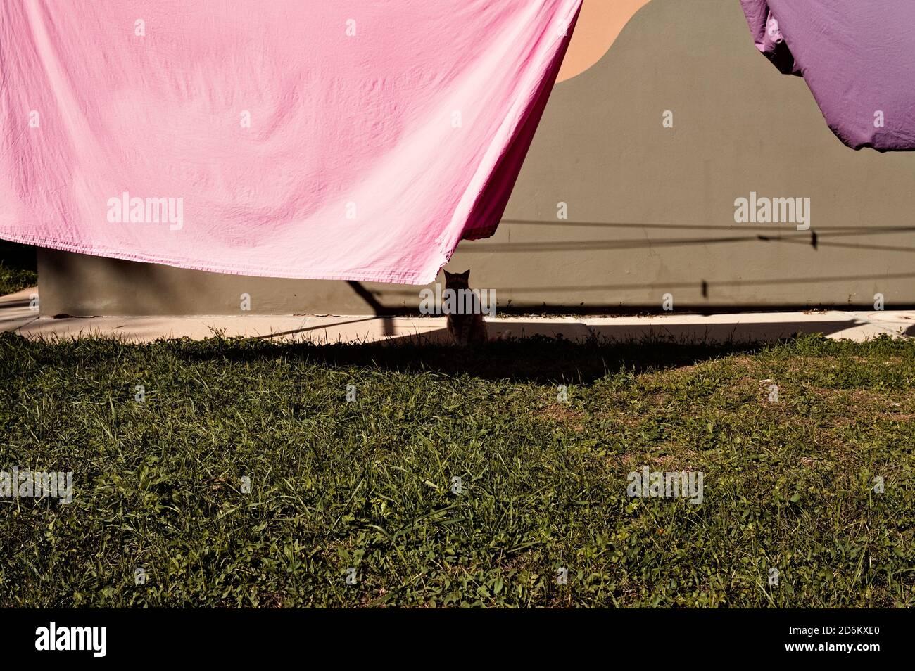 Un gato aislado a la sombra de la ropa colgando en el jardín (Pesaro, Italia, Europa) Foto de stock