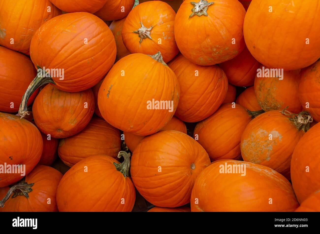 Pumpkins se exhibe en McKenzie Farm Market, 17 de octubre de 2020, en Fairhope, Alabama. Foto de stock