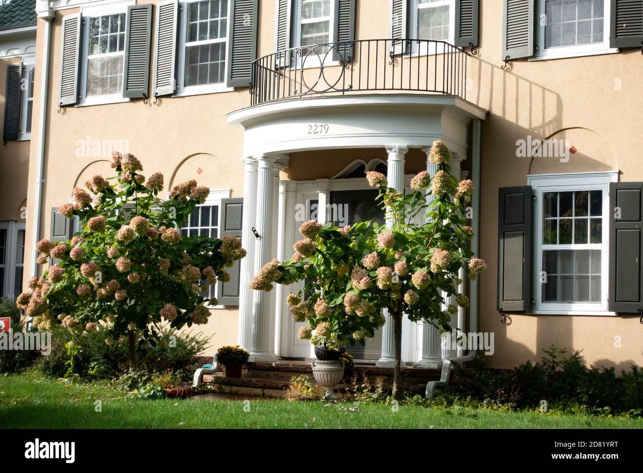 Entrada de la casa con arbustos de hortensias rosadas. St Paul Minnesota MN EE.UU Foto de stock