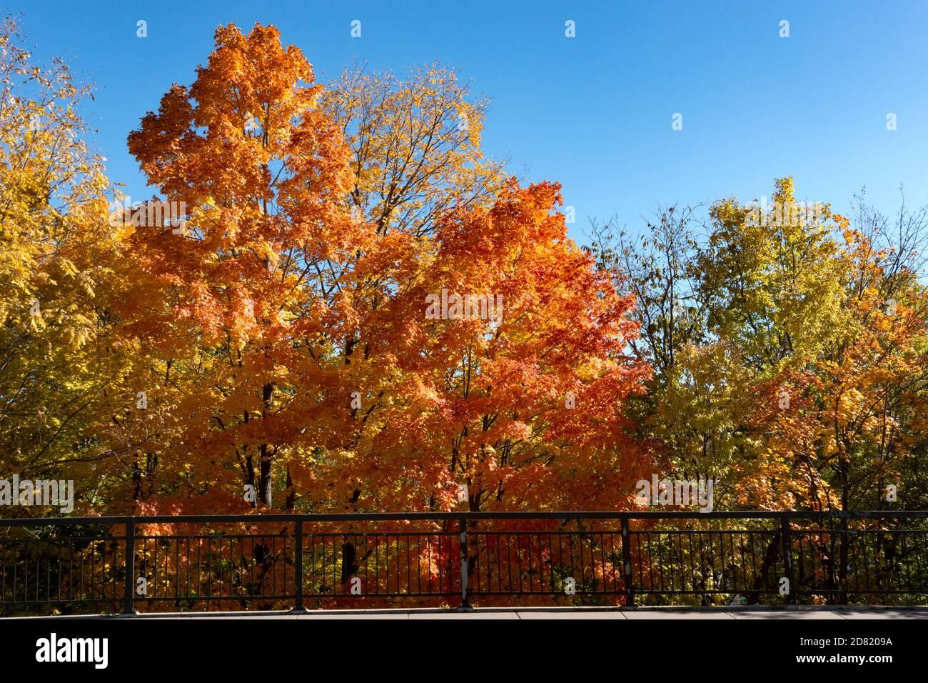 Coloridos árboles de otoño a lo largo del North Mississippi River Boulevard. St Paul Minnesota MN EE.UU Foto de stock