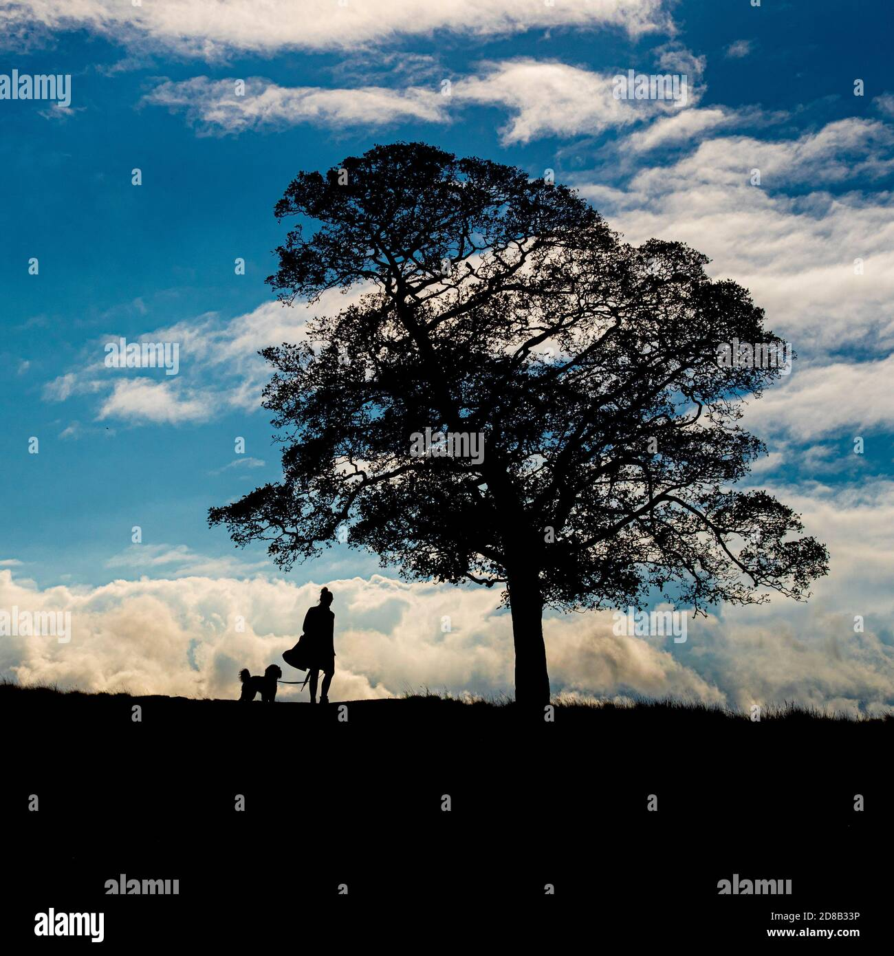 Silueta de la mujer caminante y árbol de perros contra un cielo azul. Foto de stock