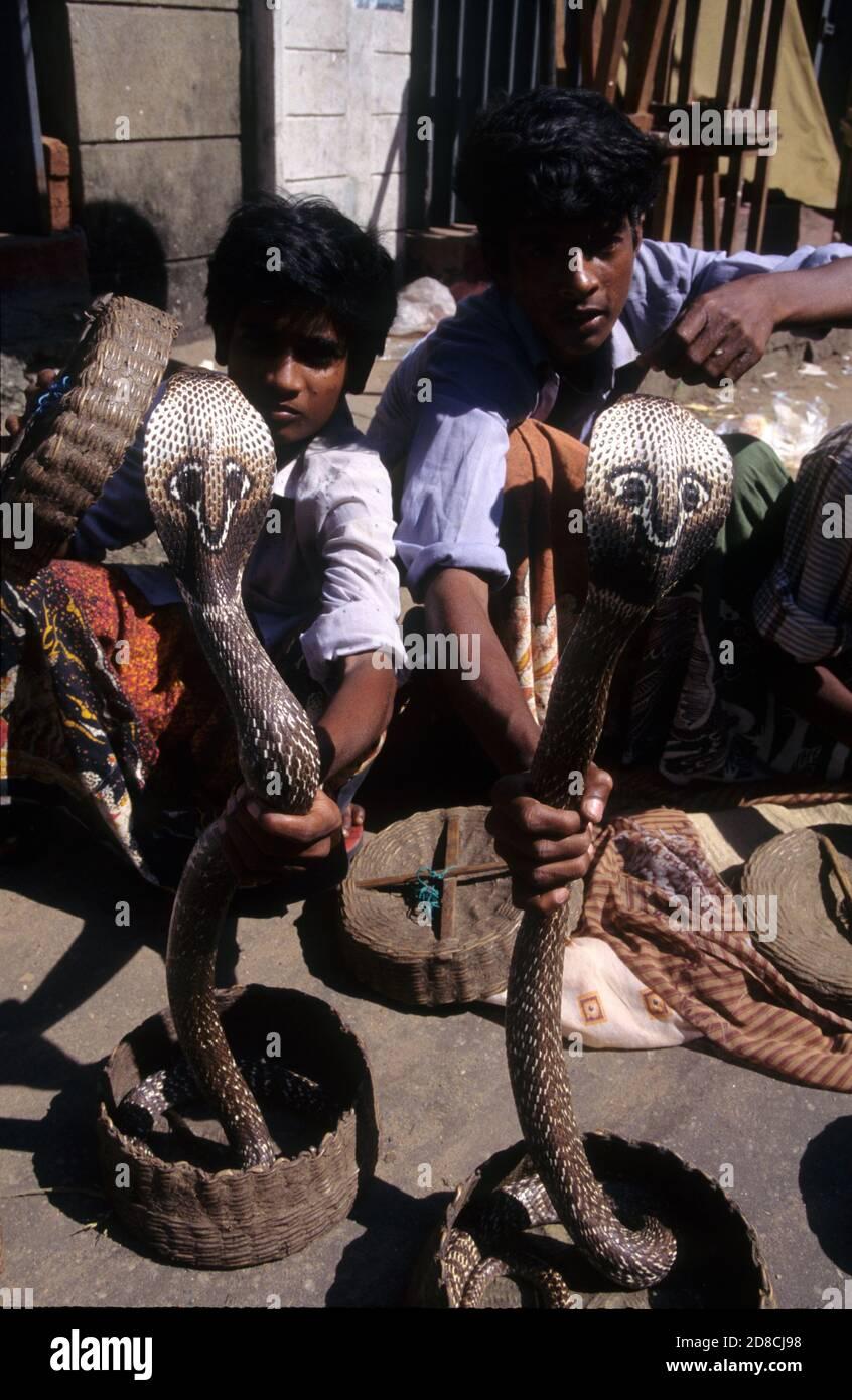 Encantadores de serpientes con cobras de cría en el distrito de Pettah bazar, Colombo, Sri Lanka Foto de stock