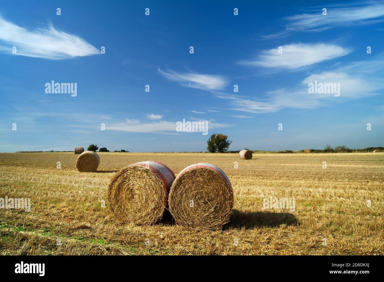 Reino Unido, South Yorkshire, Barnsley, Drum hay Bales in Field cerca de Silkstone Common Foto de stock