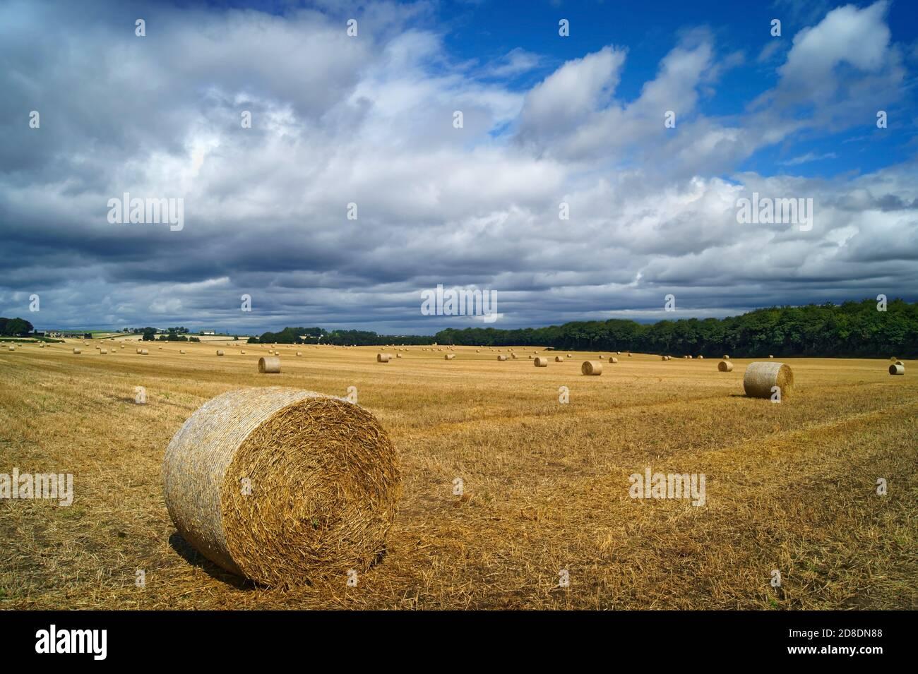 Reino Unido, South Yorkshire, Doncaster, Drum Hay Bales en Field cerca de Clayton Foto de stock