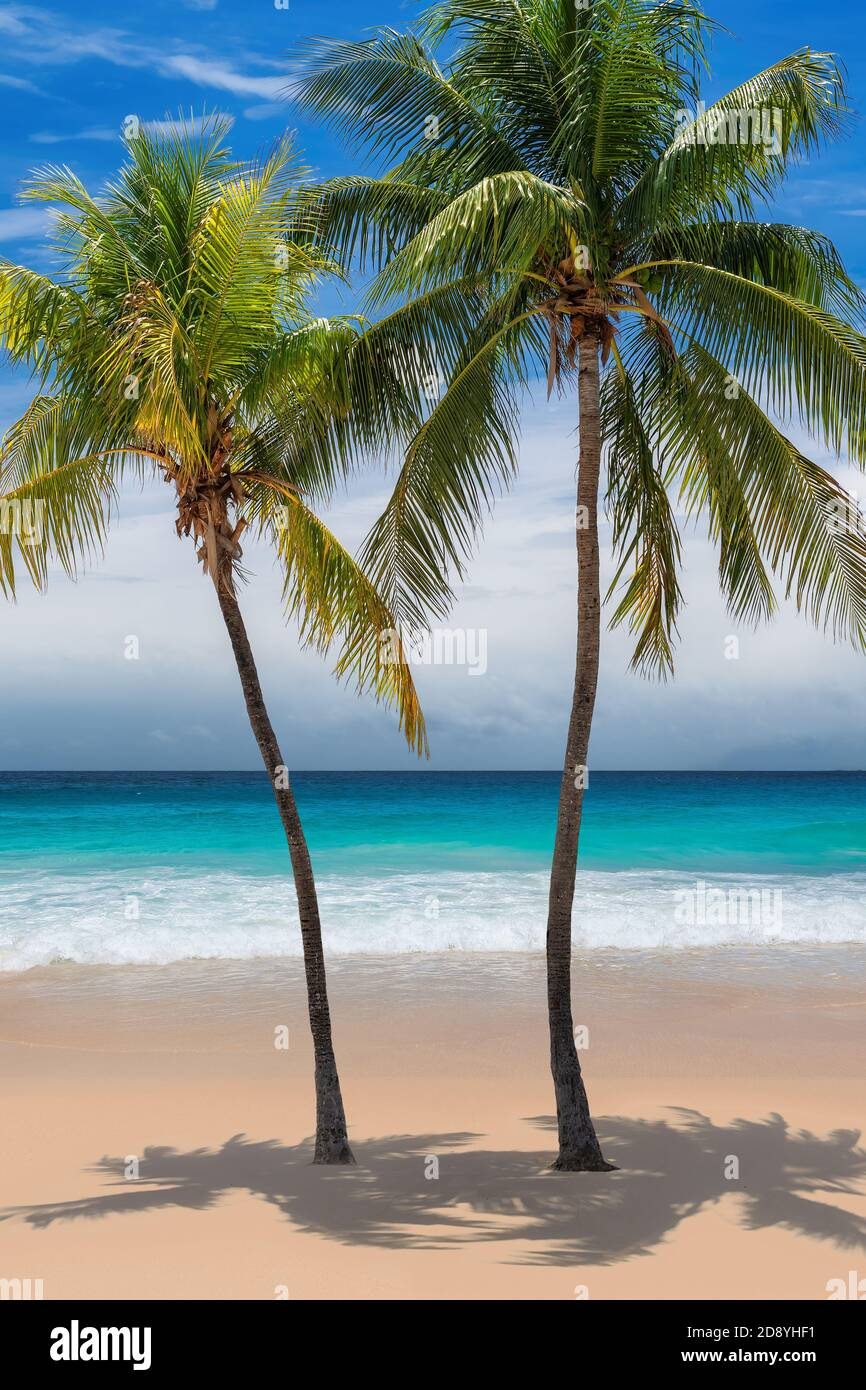 Playa tropical soleada con cocoteros y el mar turquesa en la isla del Caribe. Foto de stock