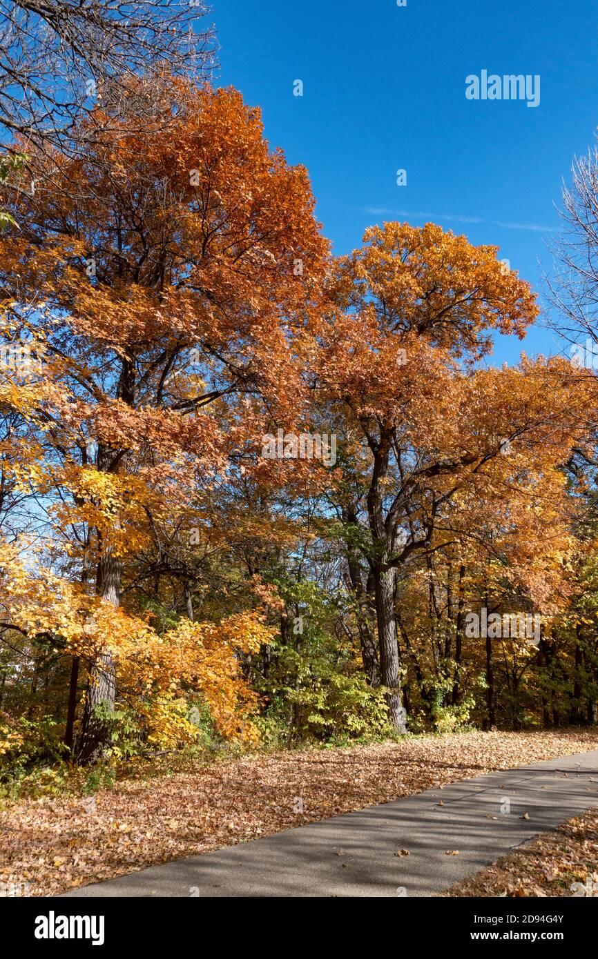 Los árboles de otoño cambian de color al lado del camino de la acera en el Mississippi River Boulevard. St Paul Minnesota MN EE.UU Foto de stock