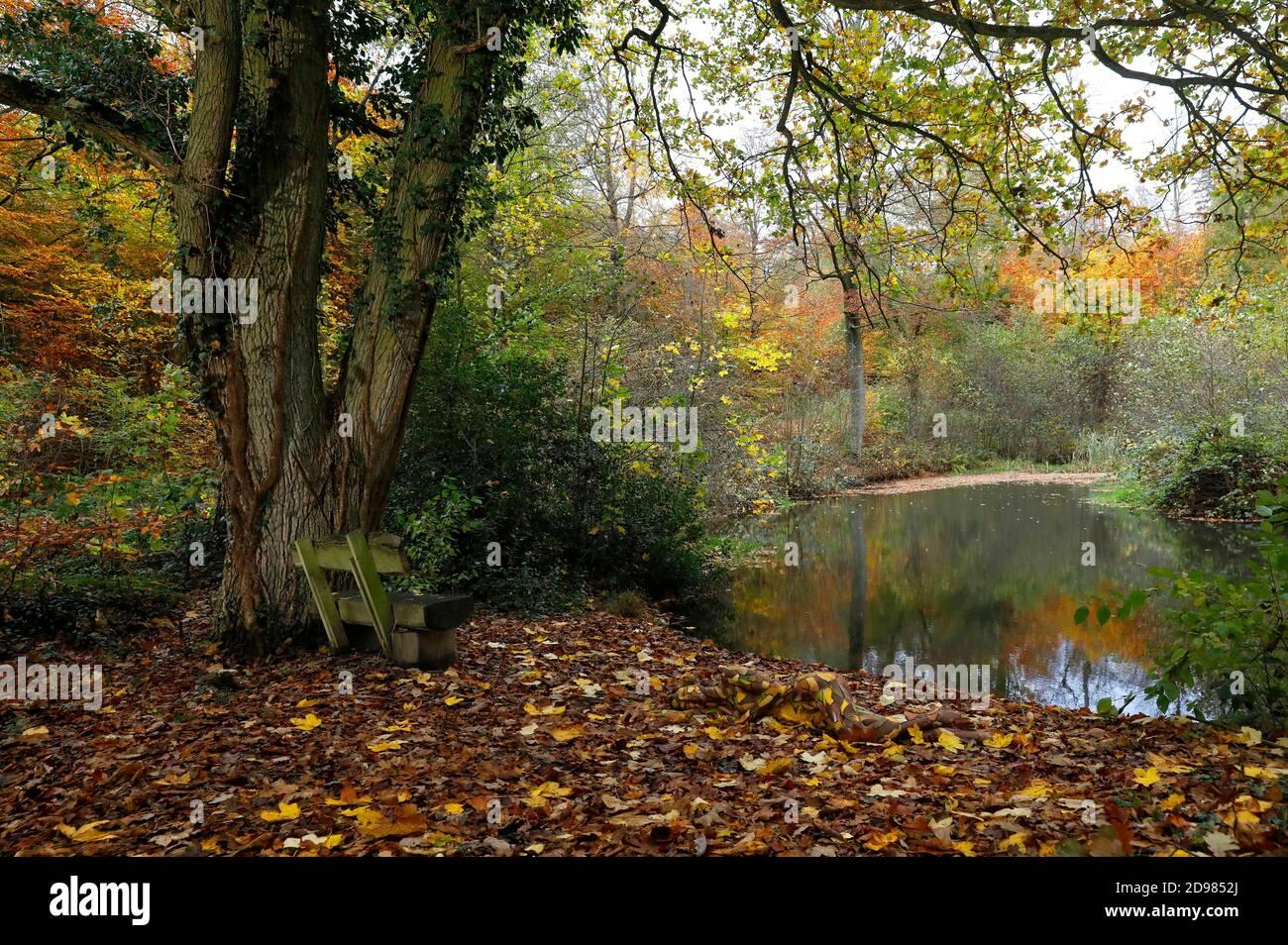 Naturaleza Arte: Hojas de otoño bodypainting y fotoshooting con modelo Lena Kiel en un estanque forestal en Bruennighausen el 01 de noviembre de 2020 - Bodypainting artista: Joerg Duesterwald Foto de stock