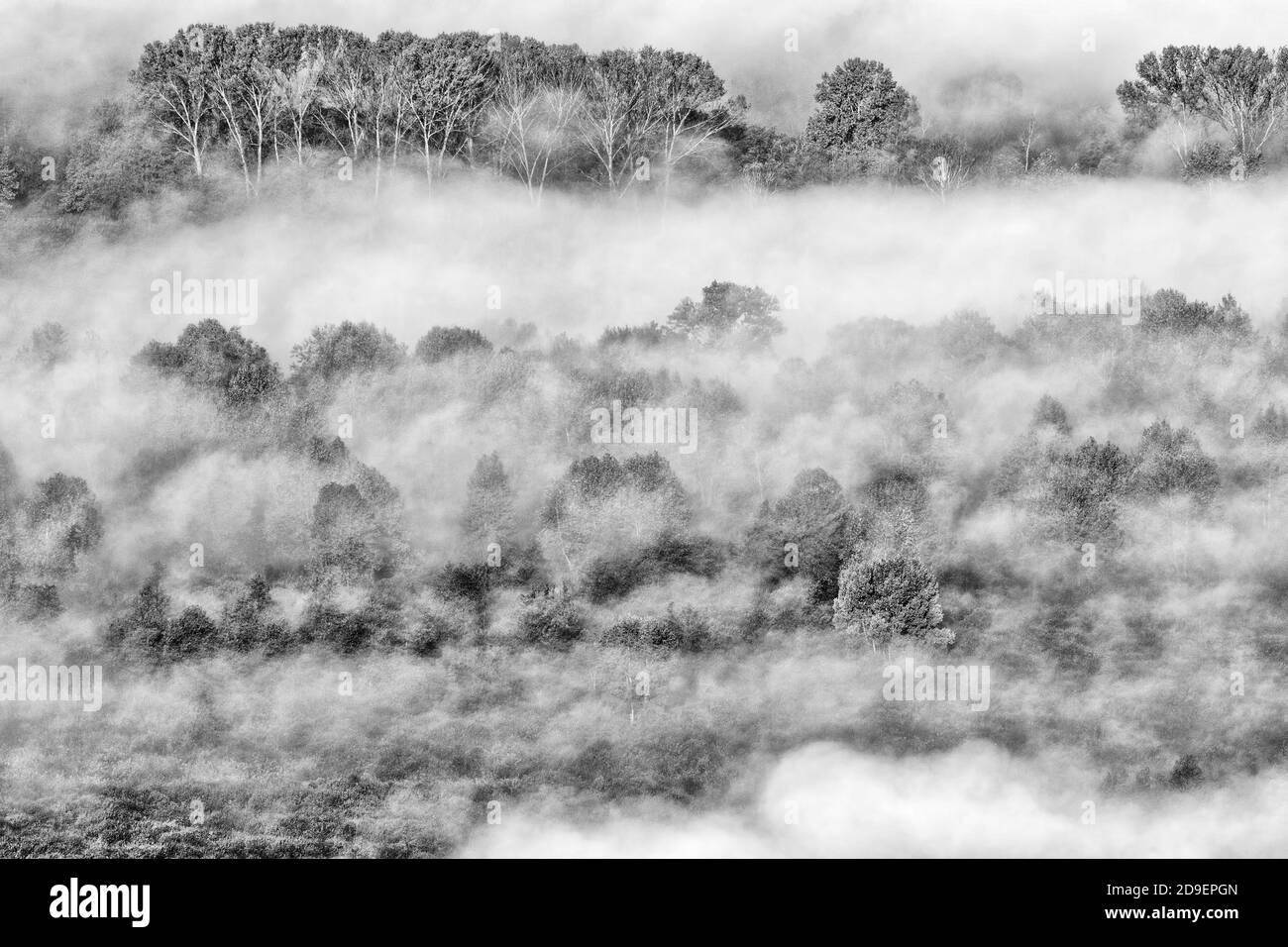Paisaje otoñal con niebla, fotografía en blanco y negro Foto de stock