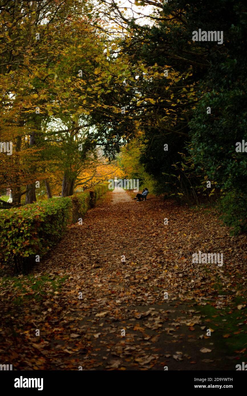 Árboles de otoño en Alexandra Park, Hastings Foto de stock