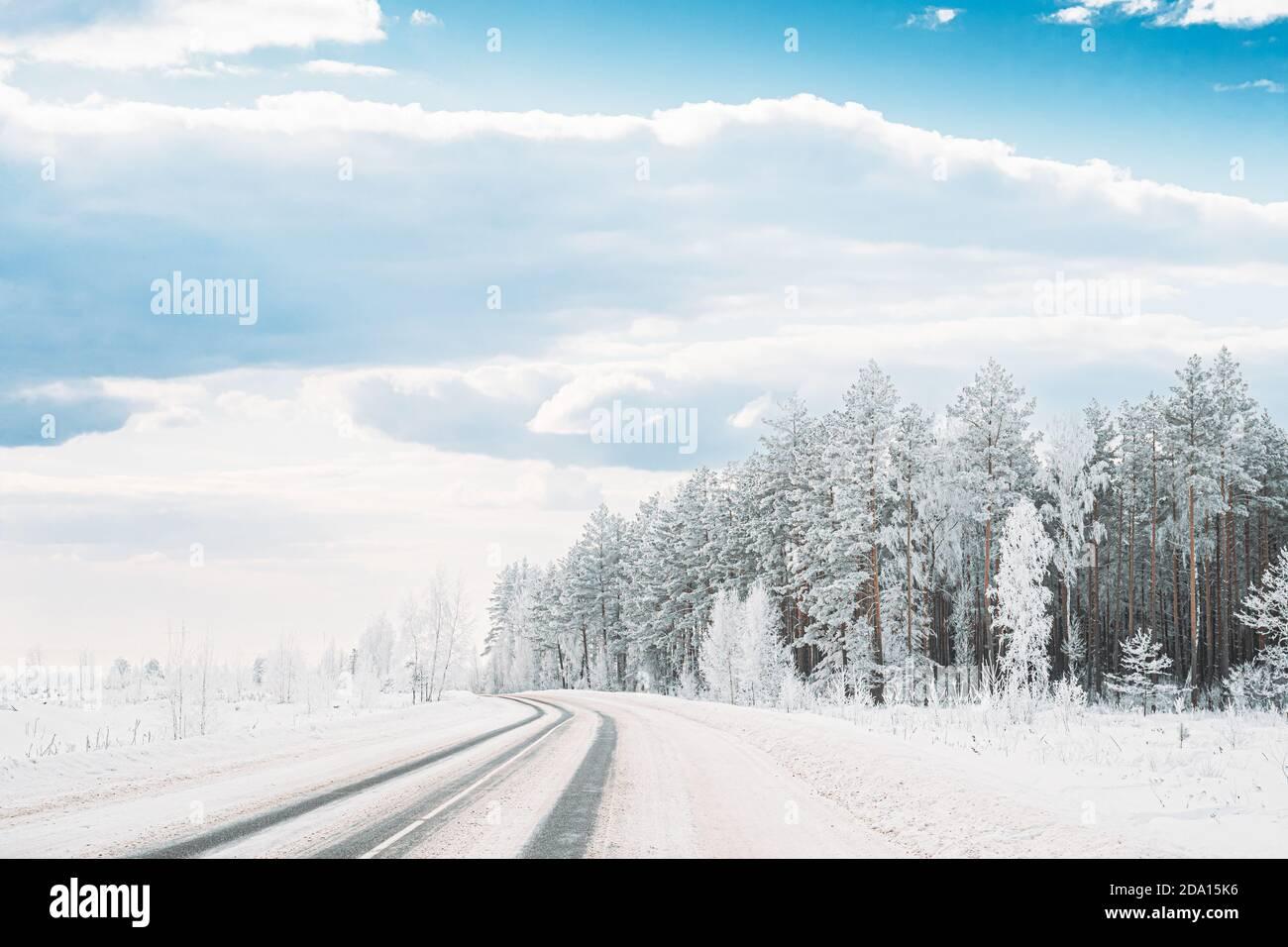 Bosque de pinos cubierto de nieve cerca de la carretera del campo. Los árboles escarchados Frozen Trunks Woods en invierno Snowy Coniferous Forest paisaje cerca de Country Road Foto de stock