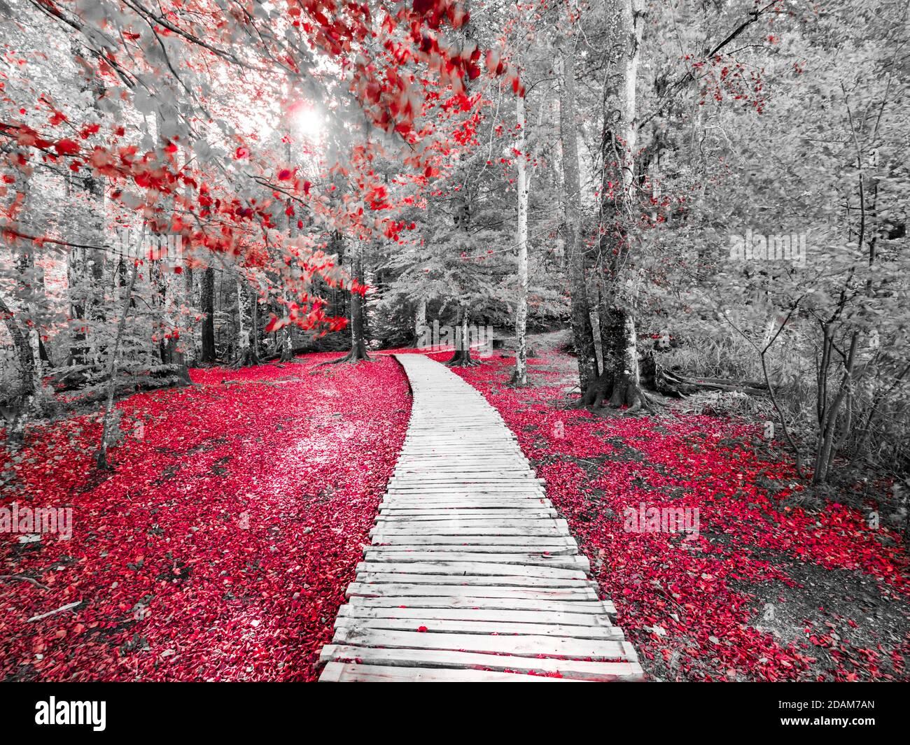 Parque nacional de los lagos de Plitvice en Croacia Europa alterada de color rojo Mezcla con blanco y negro monocromo Foto de stock