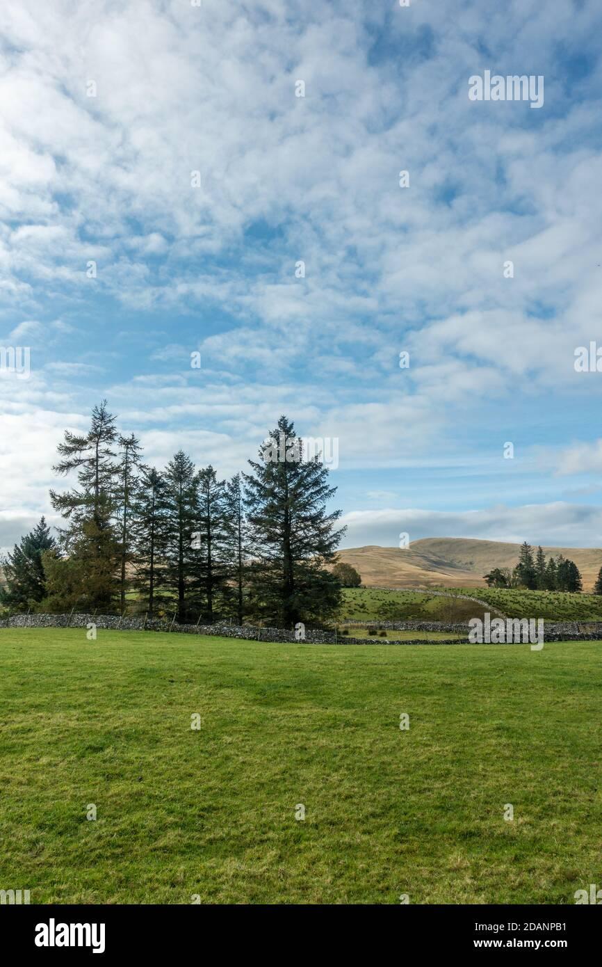 Paisaje del Reino Unido: Vistas Cumbria de tierras de cultivo en Ravenstonedale hacia las montañas Howgills, Cumbria Foto de stock