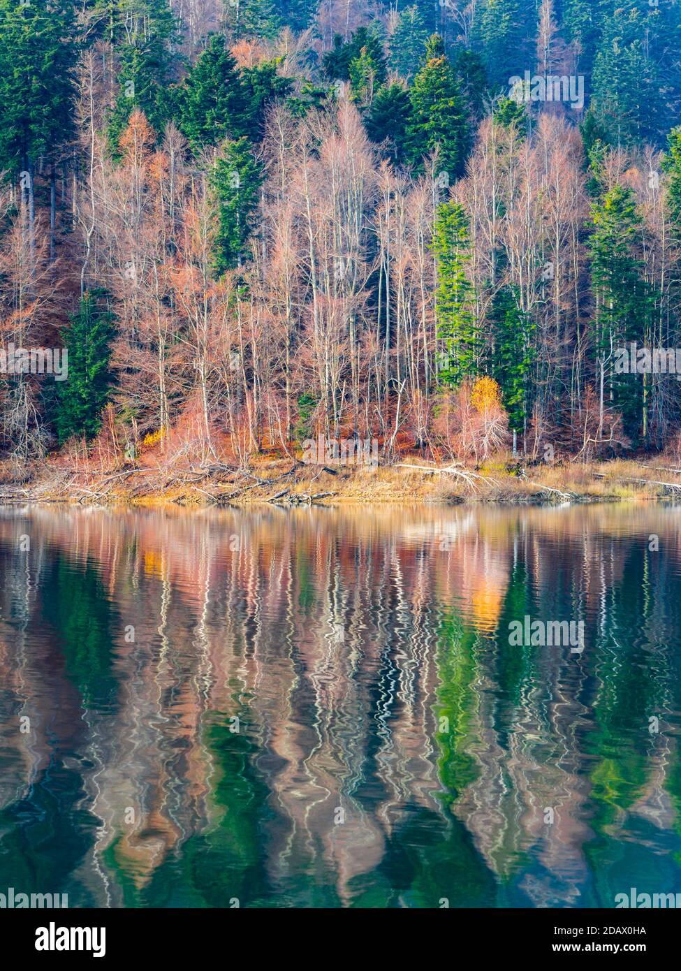 Impresionante reflejo del lago otoñal tardío con un toque de la primera mañana Olas de goteo Lokve lago Lokvarsko jezero en Croacia Europa Foto de stock