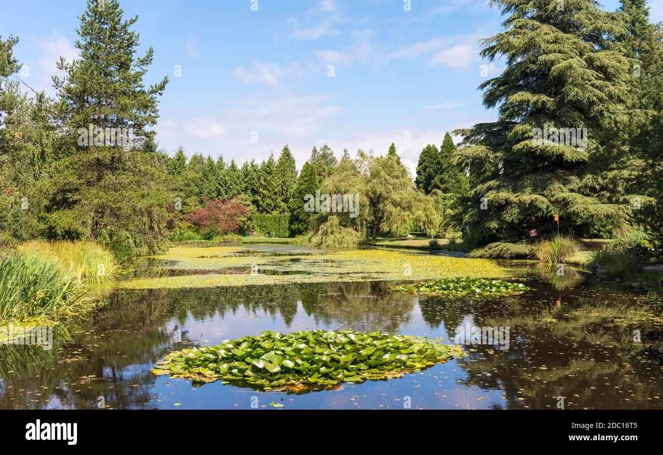 Estanque ajardinado, Jardín Botánico VanDusen, Vancouver, BC, Canadá Foto de stock