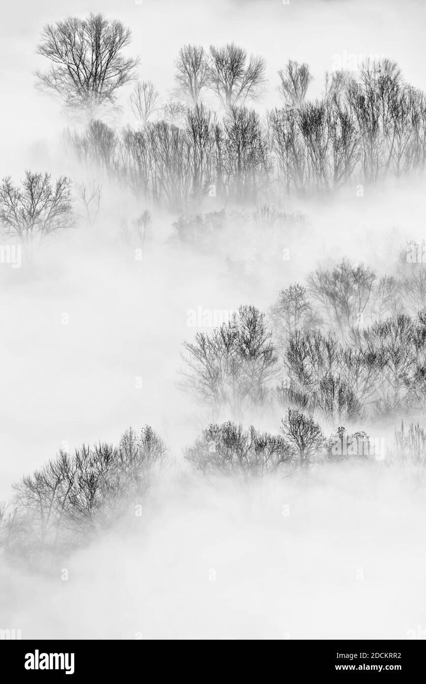 Vista aérea sobre el bosque brumoso al amanecer, fotografía de arte Foto de stock